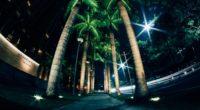 palms night street lighting 4k 1538067515 200x110 - palms, night, street, lighting 4k - Street, palms, Night