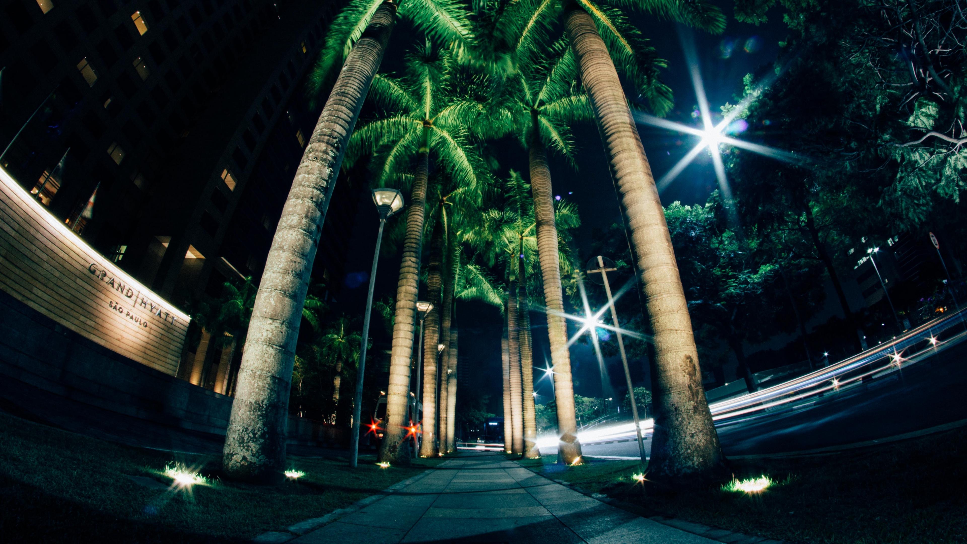 palms night street lighting 4k 1538067515 - palms, night, street, lighting 4k - Street, palms, Night