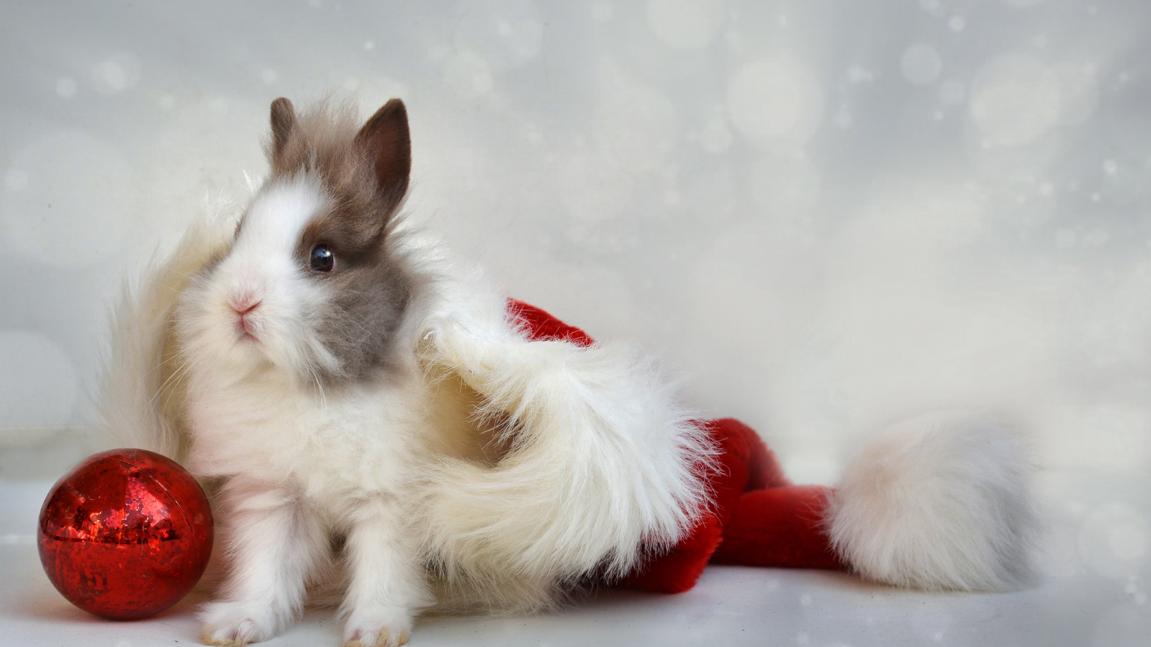 rabbit new year ball 4k 1538344868 - rabbit, new year, ball 4k - Rabbit, new year, Ball