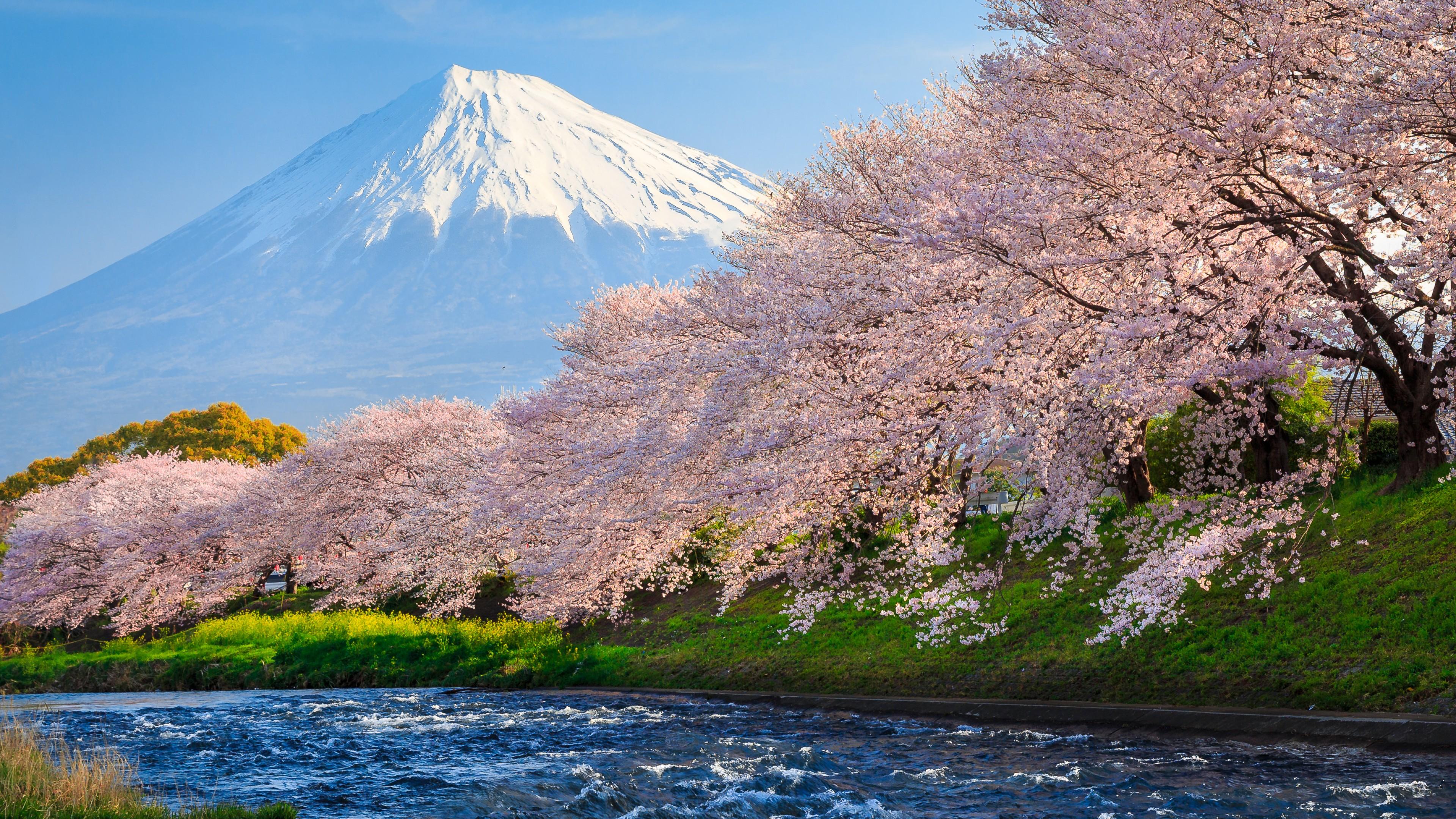 sakura river japan 1538069084 - Sakura River japan - world wallpapers, river wallpapers, japan wallpapers