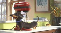 secrete life of pets movie 1536362070 200x110 - Secrete Life of Pets Movie - the secret life of pets wallpapers, movies wallpapers, cartoons wallpapers, animated movies wallpapers