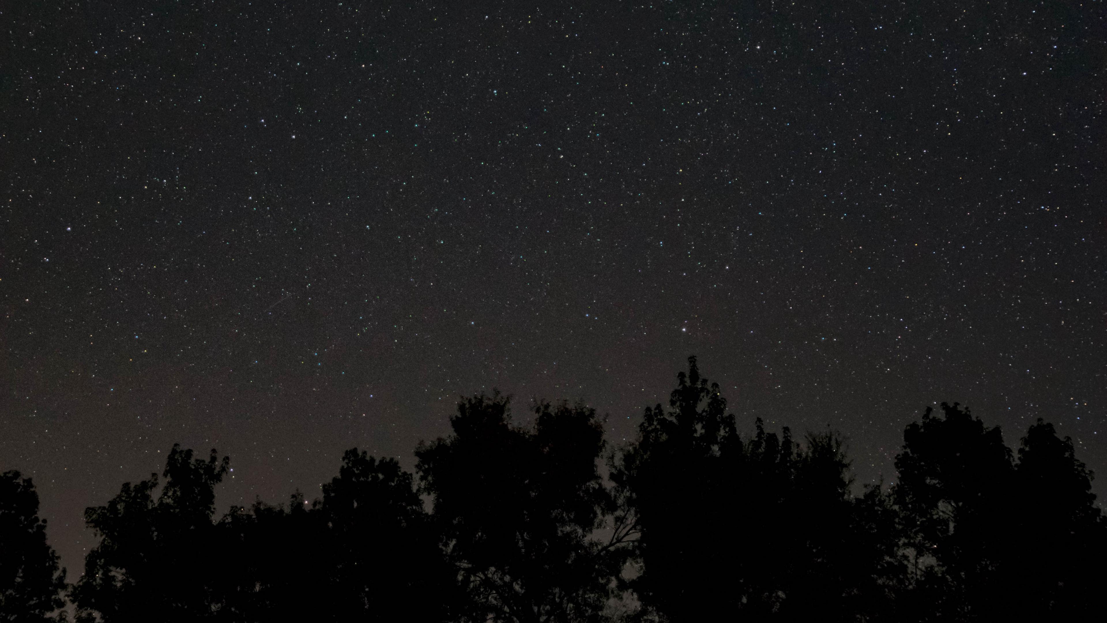 starry sky stars night trees dark 4k 1536016934 - starry sky, stars, night, trees, dark 4k - Stars, starry sky, Night