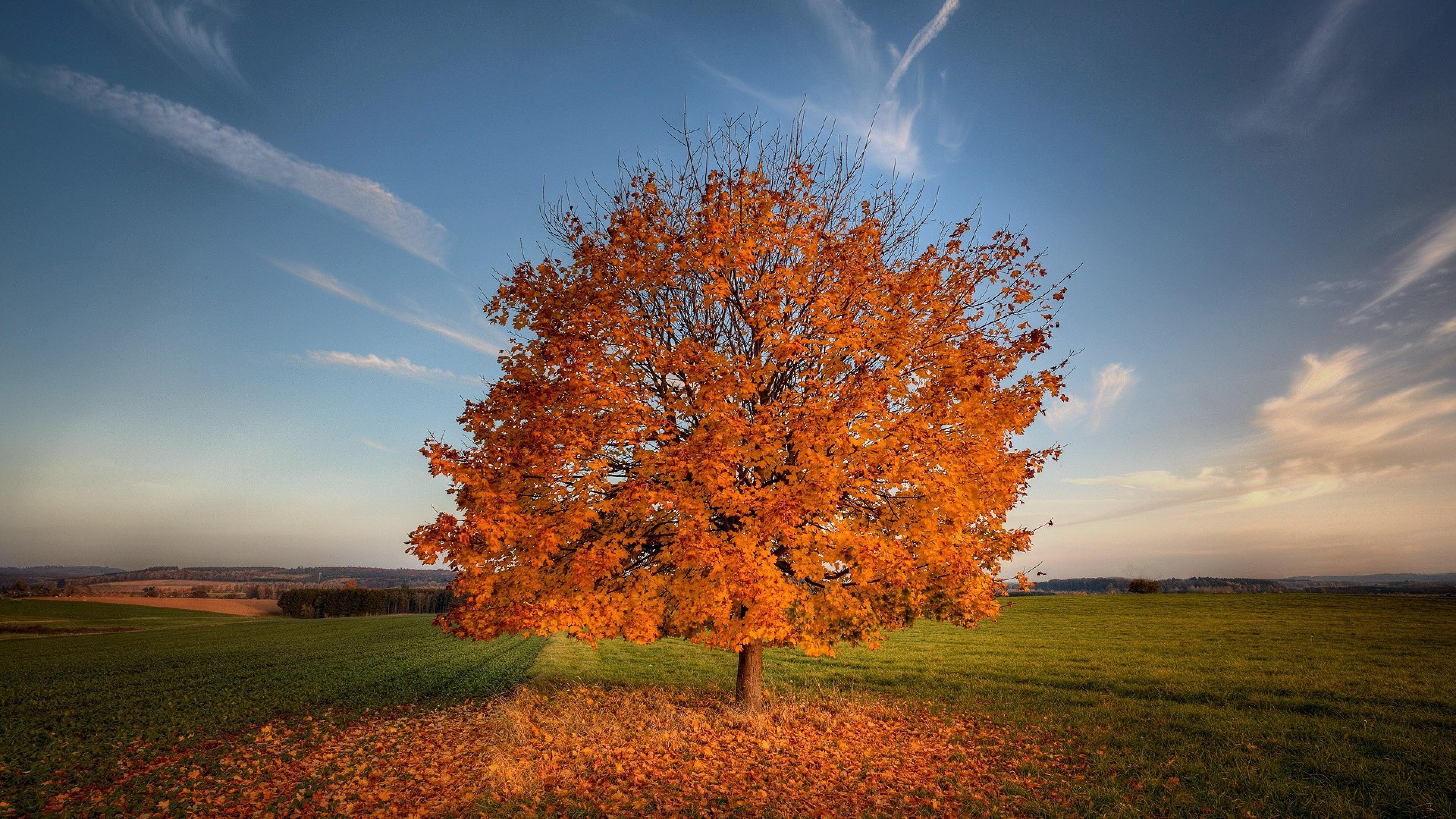 tree autumn field 1535923247 - Tree Autumn Field - trees wallpapers, nature wallpapers, field wallpapers, autumn wallpapers