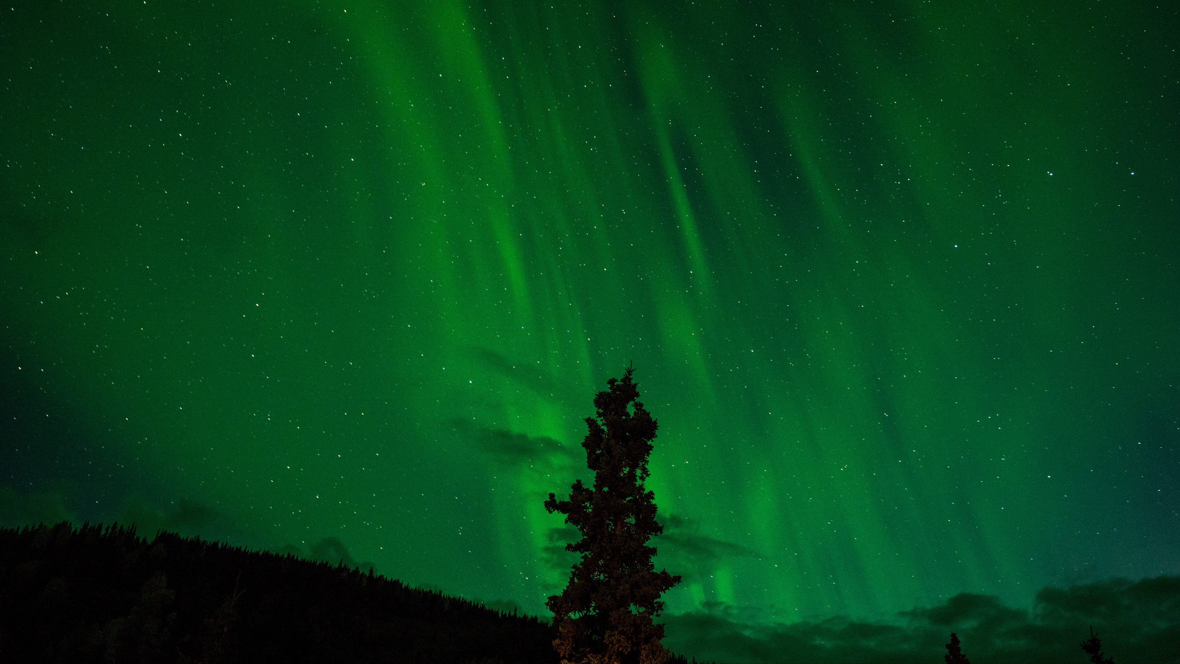 tree night sky starry sky radiance 4k 1536016903 - tree, night sky, starry sky, radiance 4k - tree, starry sky, night sky