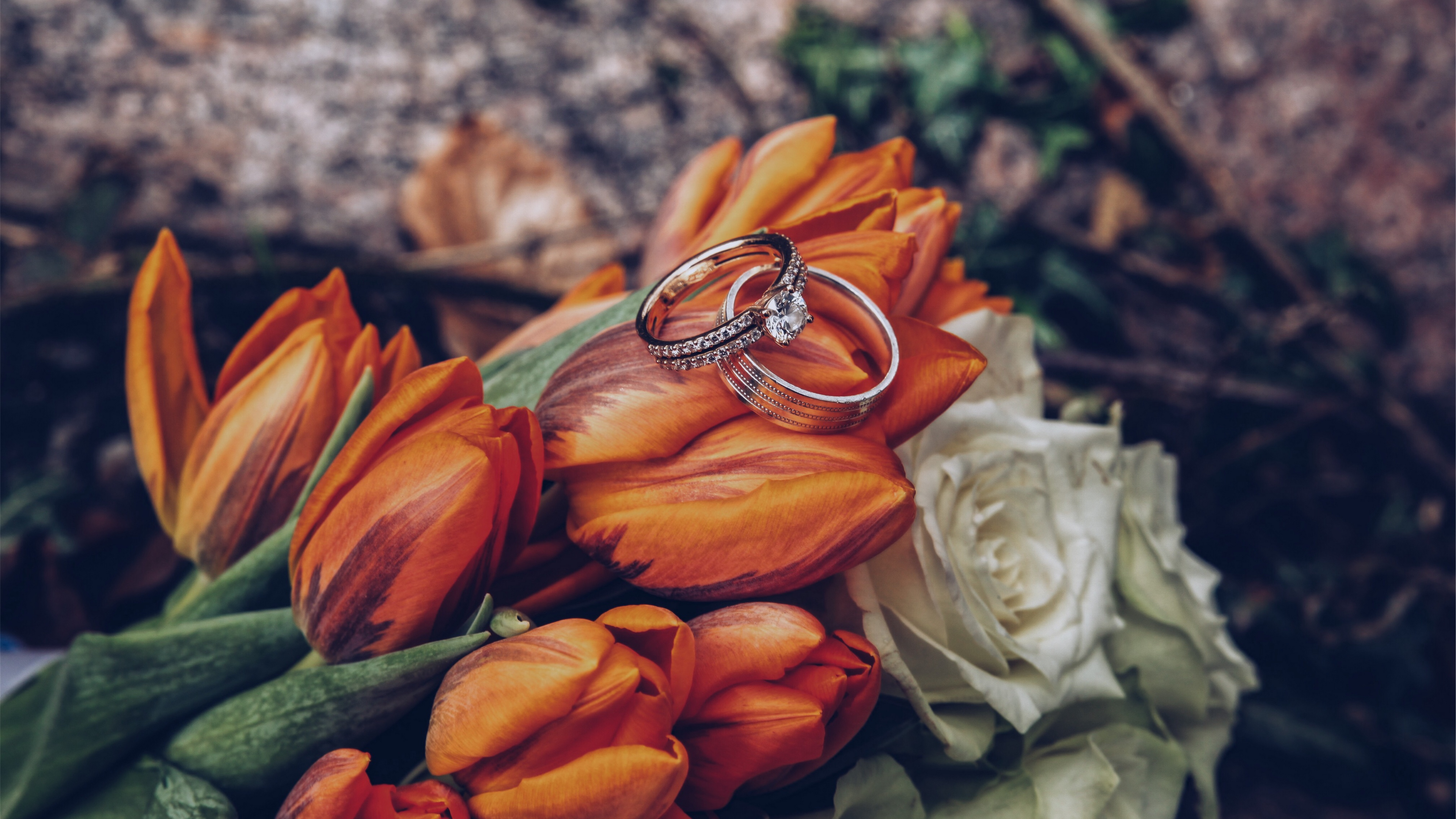 tulips rings flowers romance wedding 4k 1538344840 - tulips, rings, flowers, romance, wedding 4k - Tulips, Rings, Flowers