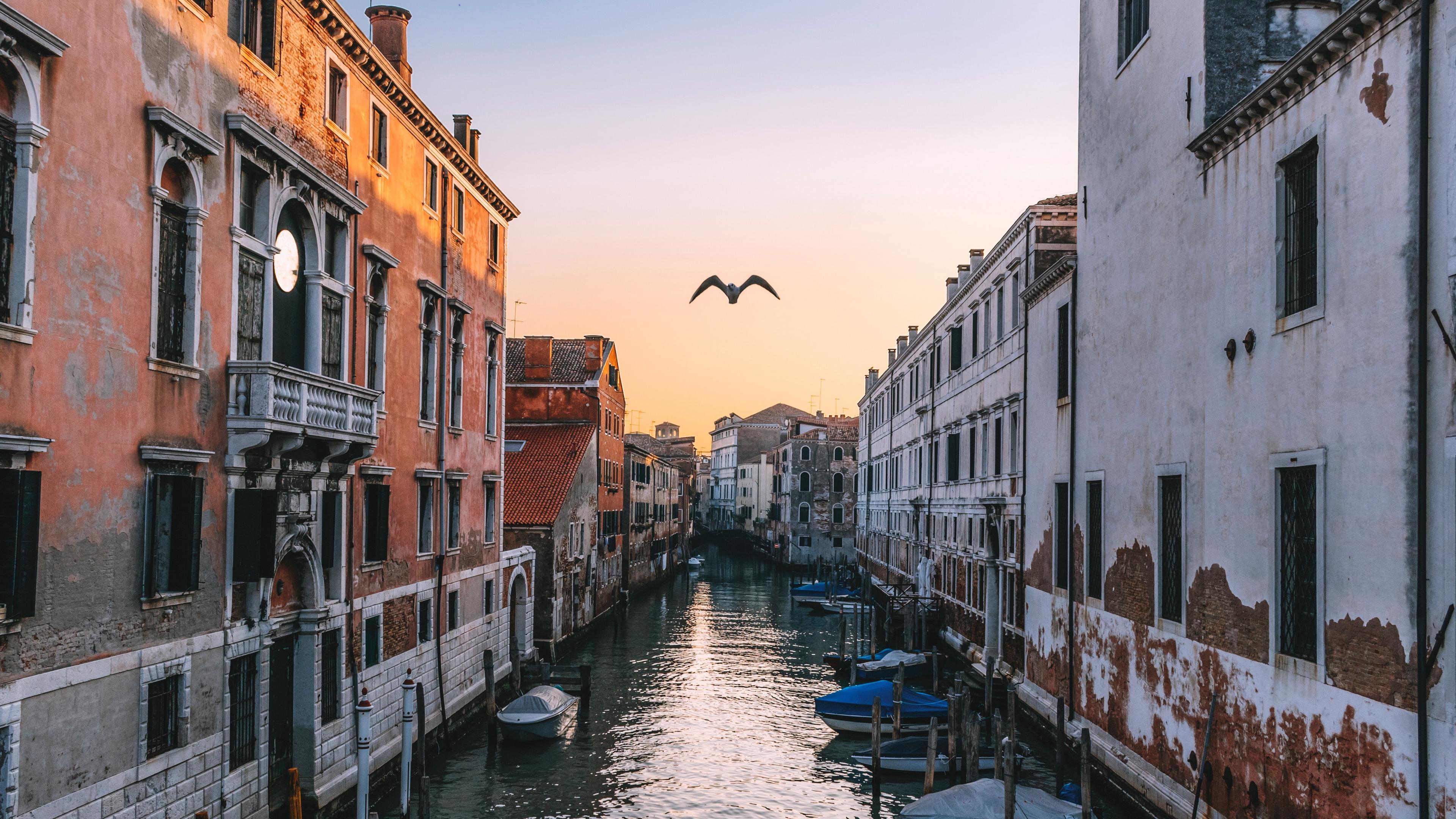 venice italy canal seagull river 4k 1538065422 - venice, italy, canal, seagull, river 4k - Venice, Italy, Canal