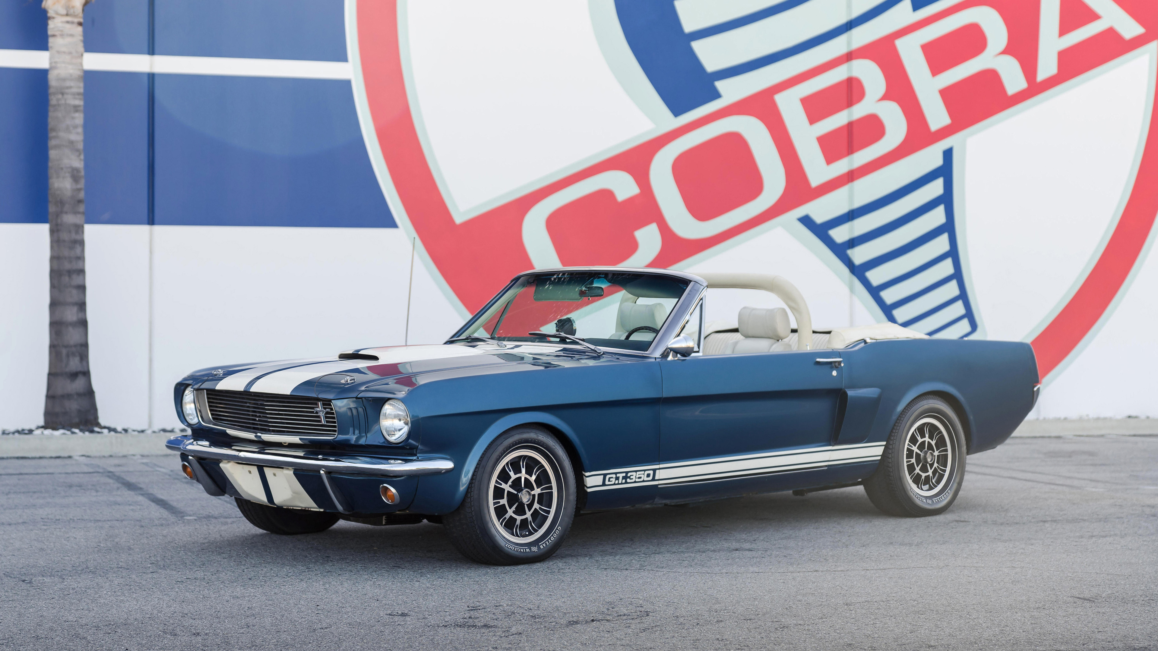 1966 shelby gt350 continuation series convertible 1539111582 - 1966 Shelby GT350 Continuation Series Convertible - vintage cars wallpapers, shelby wallpapers, hd-wallpapers, cars wallpapers, 4k-wallpapers
