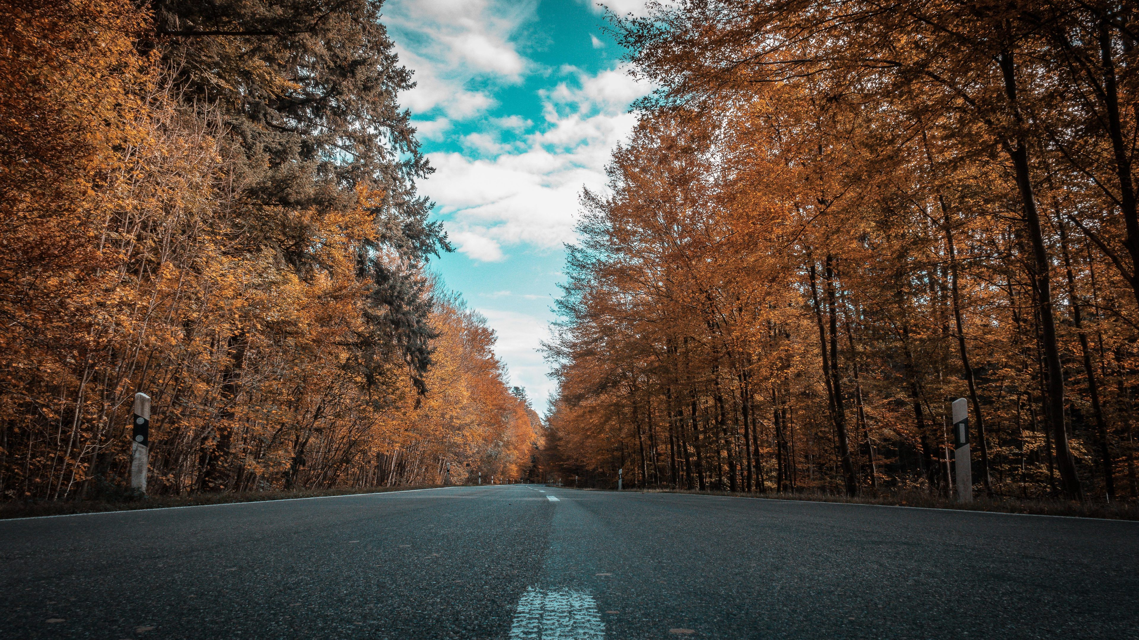 Wallpaper 4k Alone Road Forest Autumn Golden Trees Ultra 4k 4k Wallpapers 5k Wallpapers Autumn Wallpapers Forest Wallpapers Hd Wallpapers Road Wallpapers Trees Wallpapers