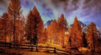 alpine mountains autumn forest trees 4k 1540134777 200x110 - Alpine Mountains Autumn Forest Trees 4k - trees wallpapers, nature wallpapers, hd-wallpapers, forest wallpapers, autumn wallpapers, 4k-wallpapers