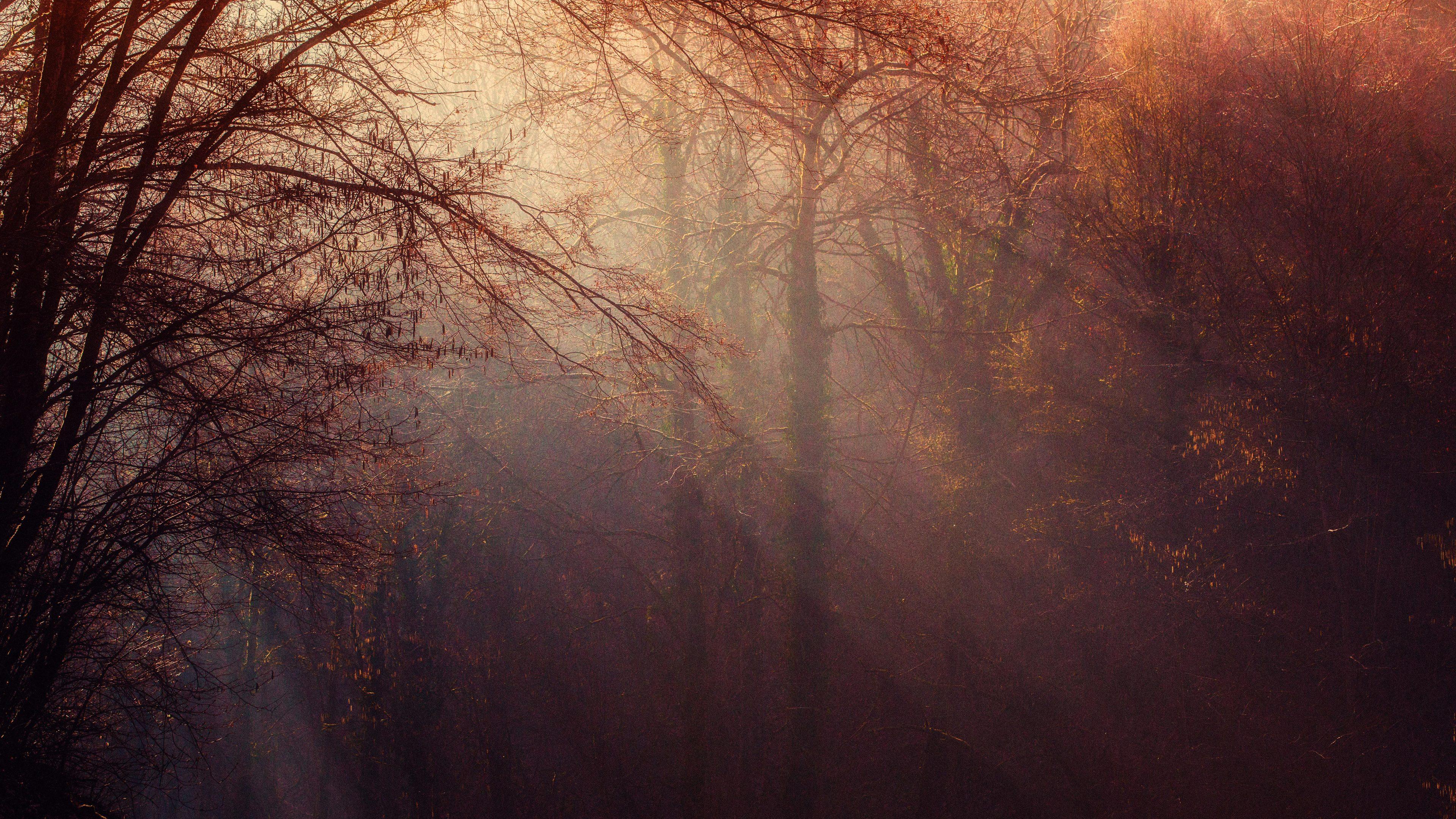 autumn forest sunbeams 4k 1540134799 - Autumn Forest Sunbeams 4k - sunbeam wallpapers, nature wallpapers, hd-wallpapers, forest wallpapers, autumn wallpapers, 5k wallpapers, 4k-wallpapers