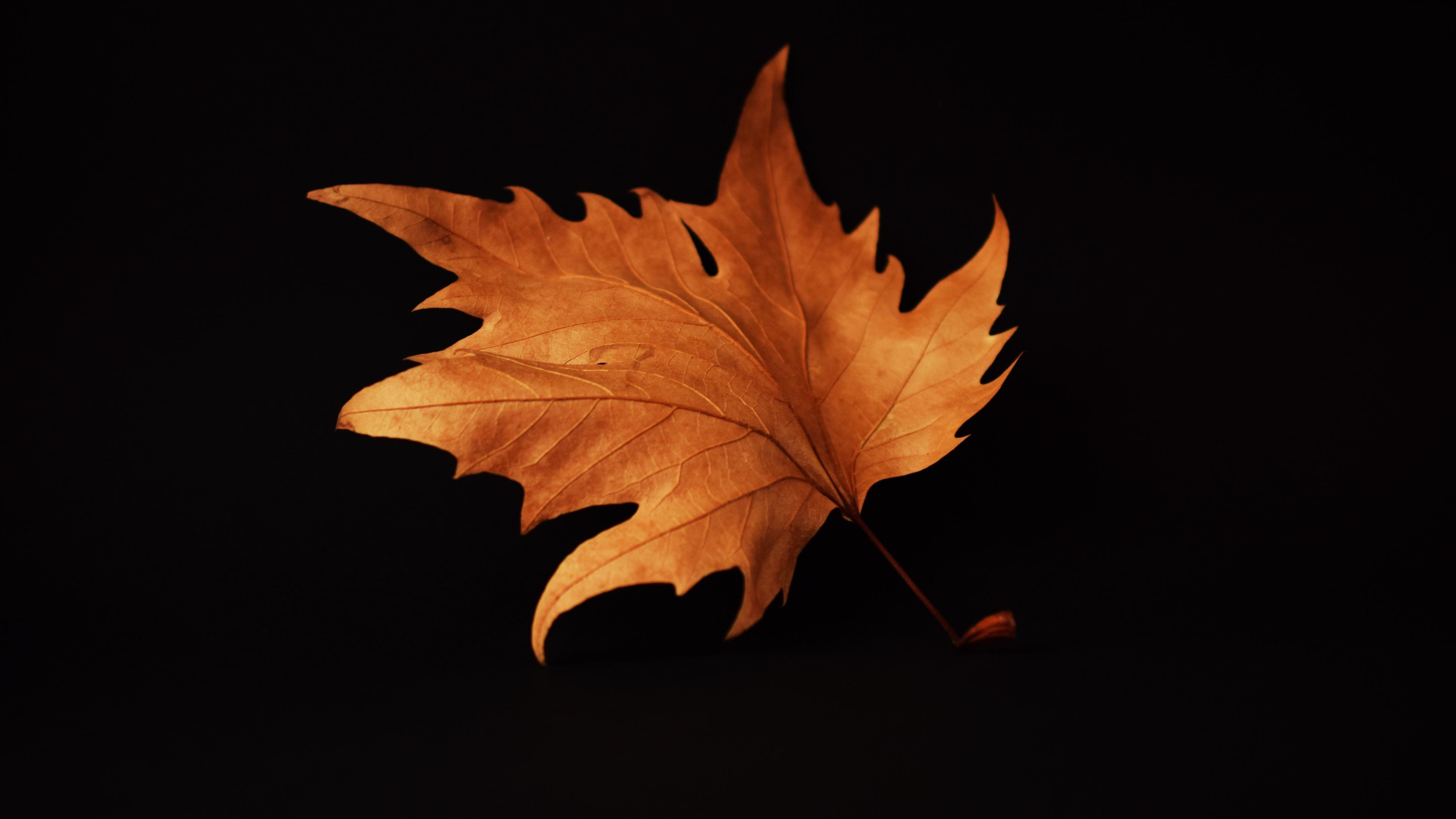 Wallpaper 4k Autumn Leaf Black Background 4k 4k Wallpapers