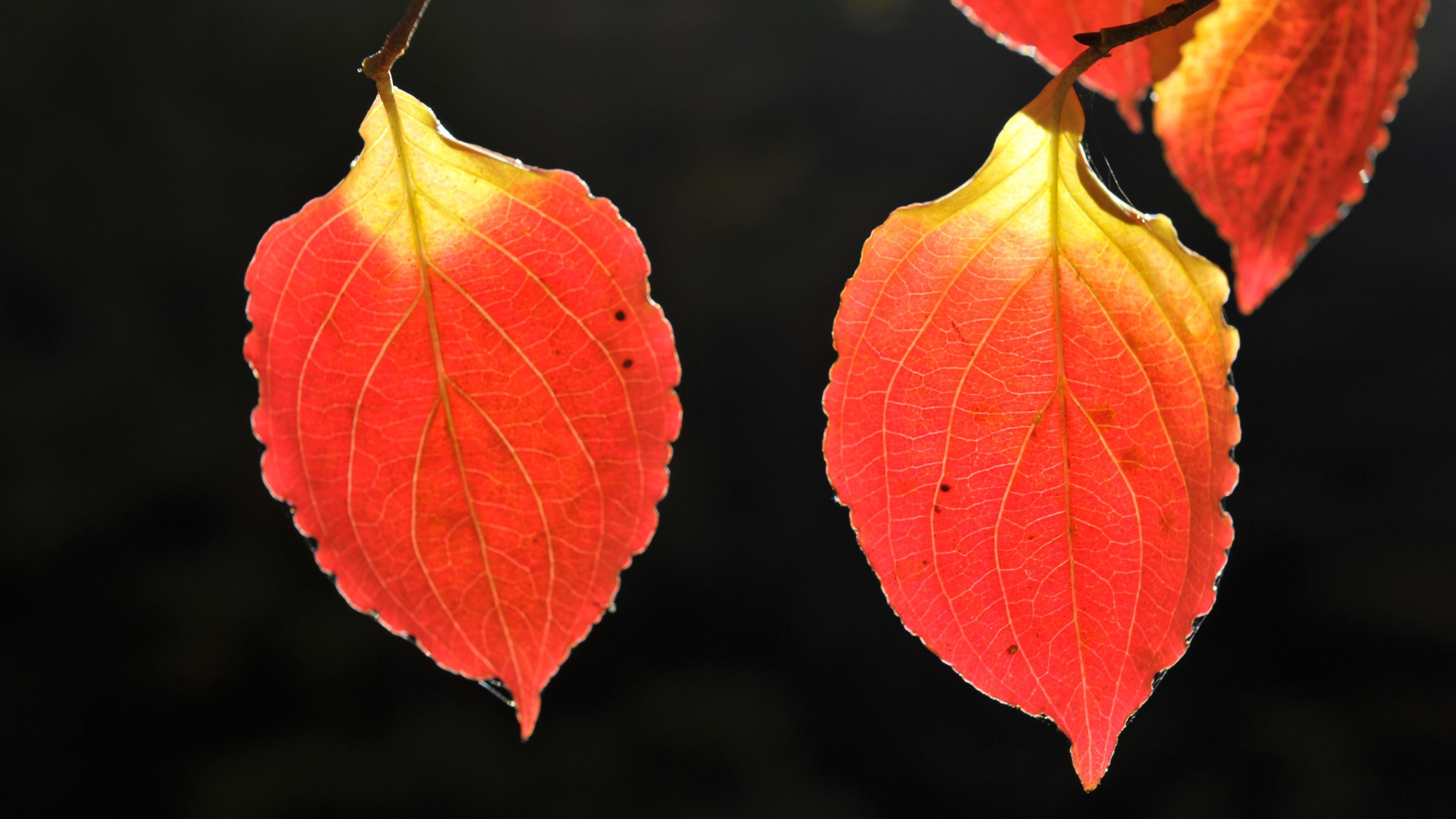 Wallpaper 4k Autumn Leaves 4k 4k Wallpapers 5k Wallpapers