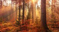 autumn sunbeams forest light rays 4k 1540139299 200x110 - Autumn Sunbeams Forest Light Rays 4k - sunbeam wallpapers, nature wallpapers, hd-wallpapers, forest wallpapers, autumn wallpapers, 5k wallpapers, 4k-wallpapers