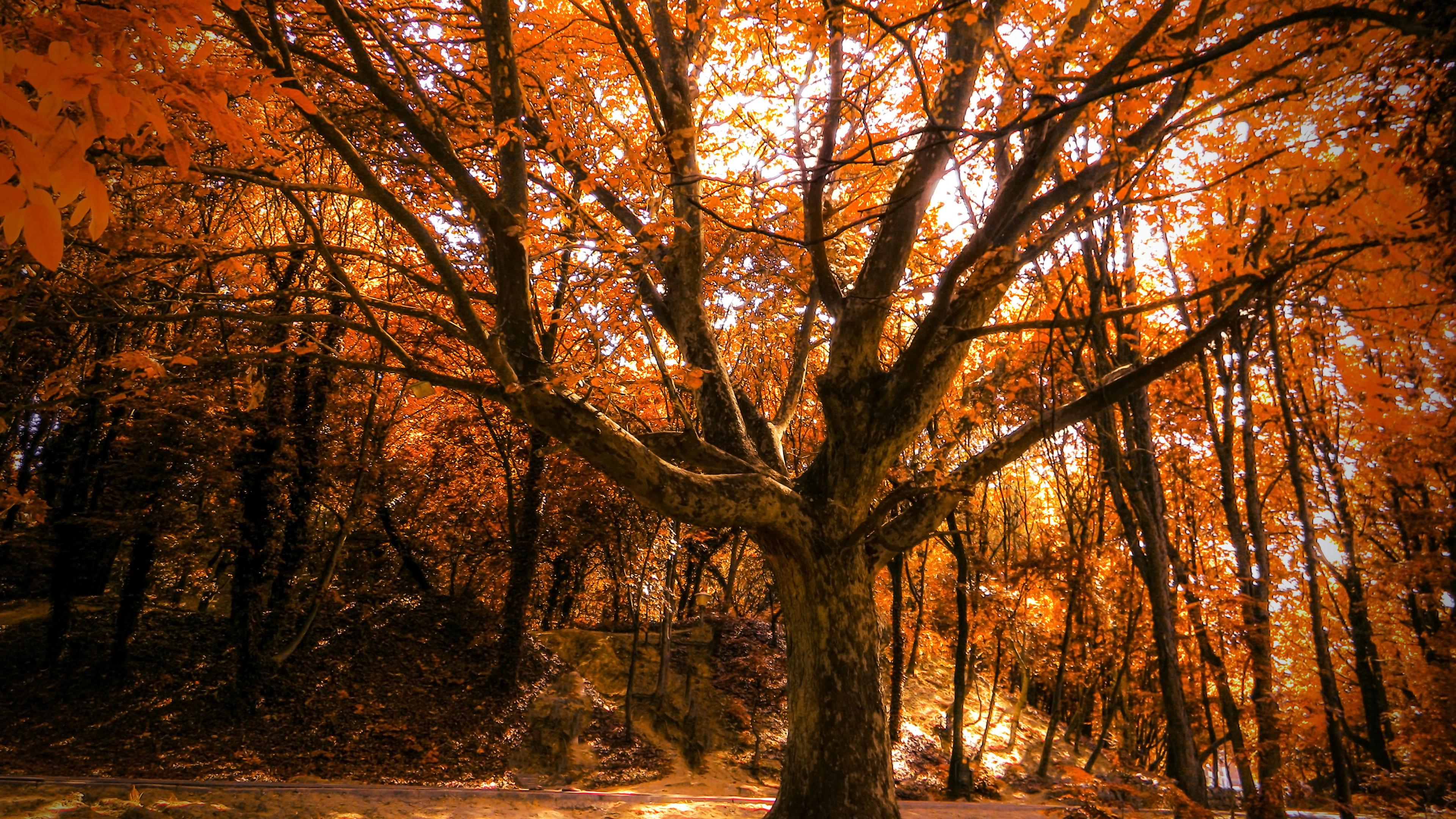 autumn tree 4k 1540142950 - Autumn Tree 4k - tree wallpapers, nature wallpapers, hd-wallpapers, autumn wallpapers, 4k-wallpapers
