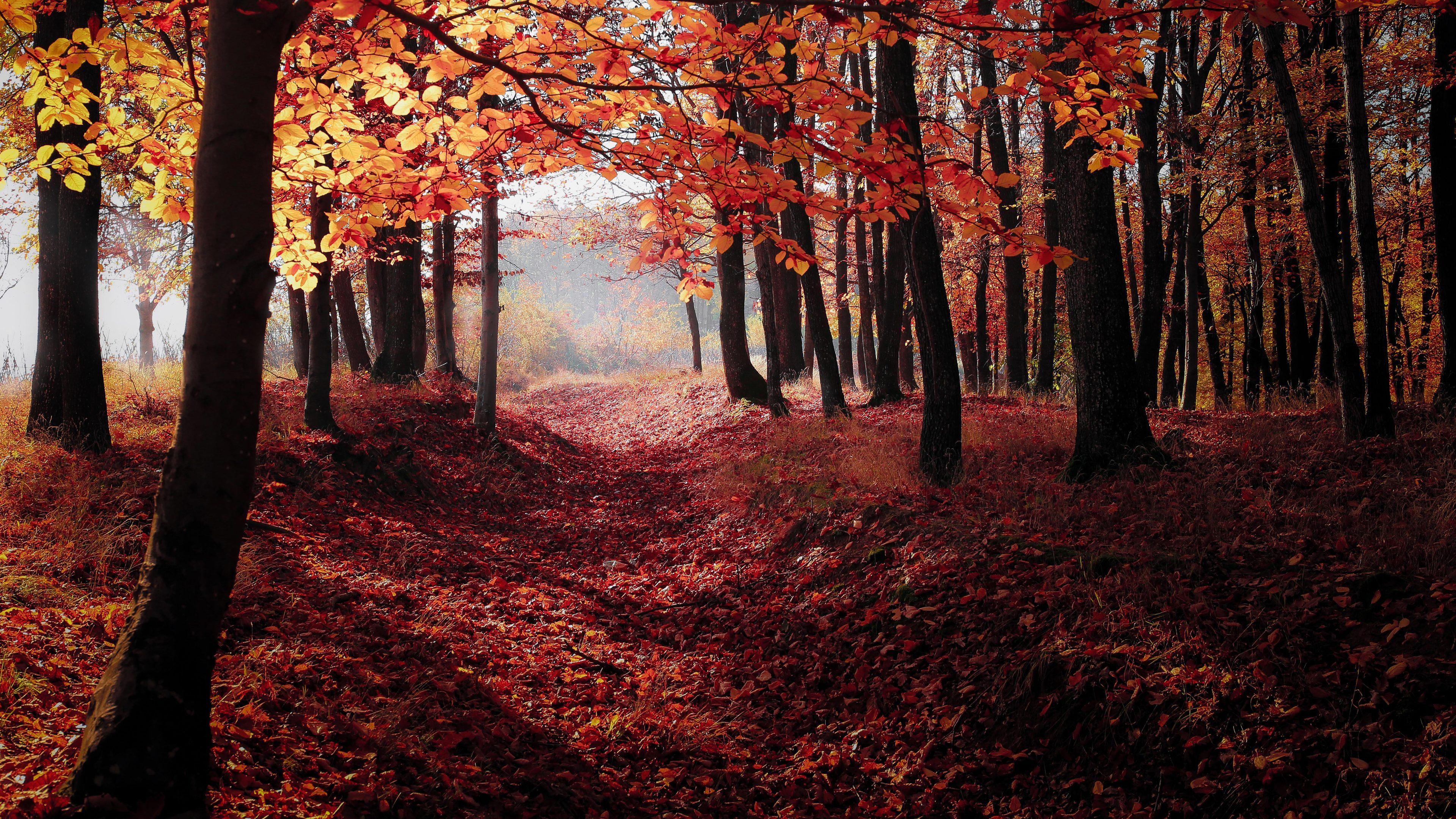 Wallpaper 4k Autumn Woods Trees Fall Forest 4k 4k Wallpapers