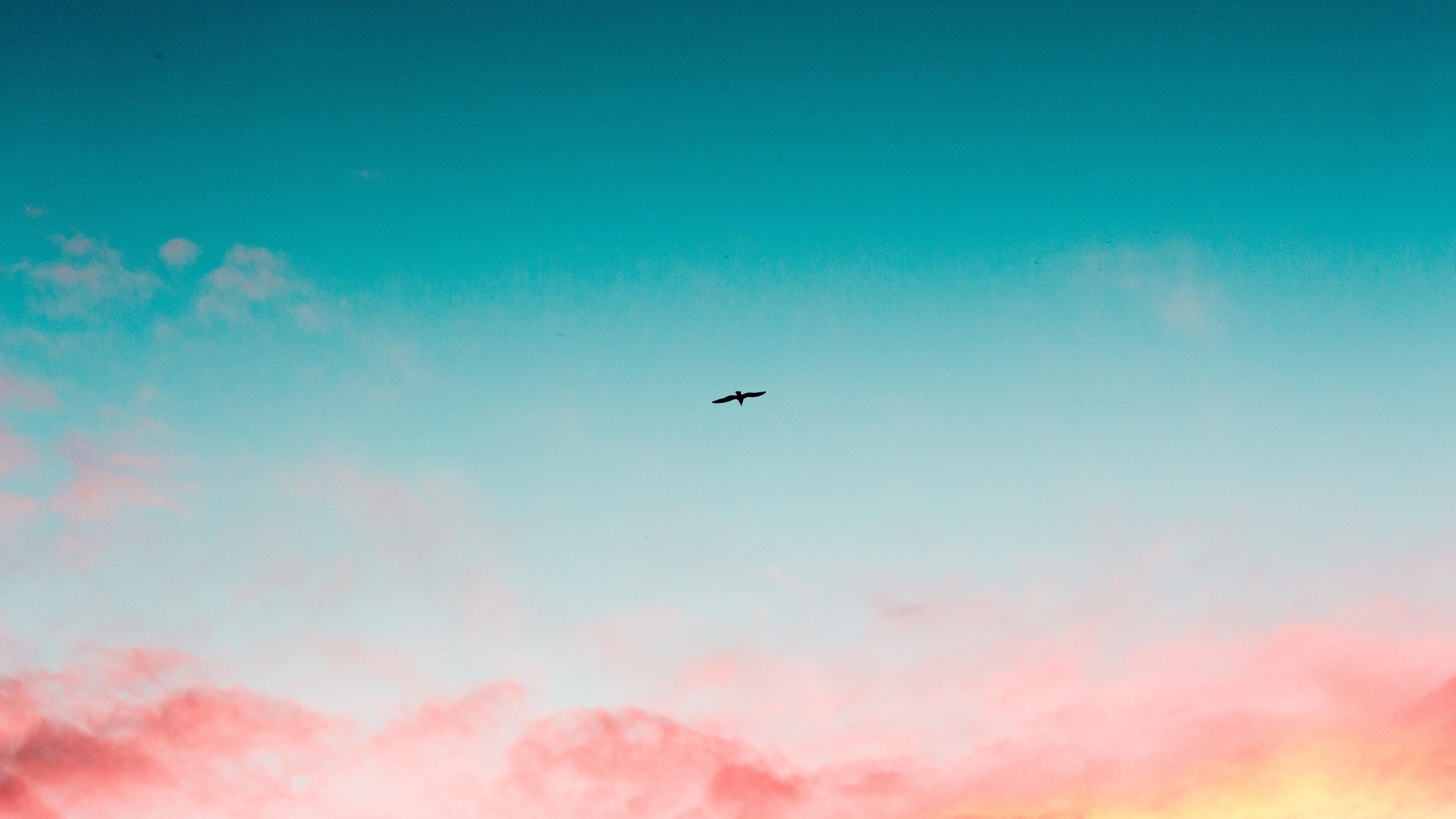 beautiful sky clouds bird flying 4k 1540136525 - Beautiful Sky Clouds Bird Flying 4k - sky wallpapers, nature wallpapers, hd-wallpapers, flying wallpapers, clouds wallpapers, bird wallpapers, 4k-wallpapers