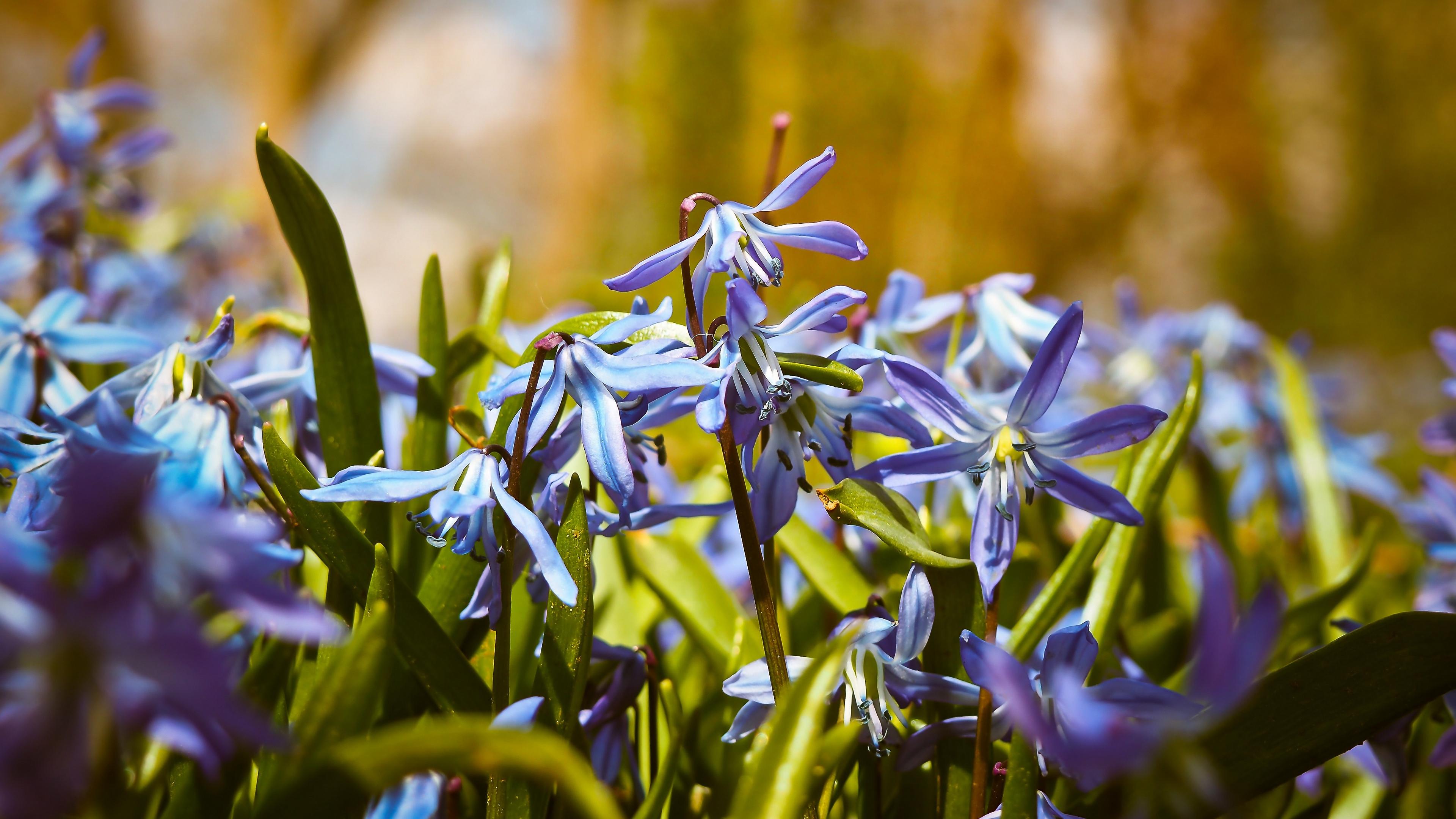 bells flowers macro 4k 1540064803 - bells, flowers, macro 4k - Macro, Flowers, bells