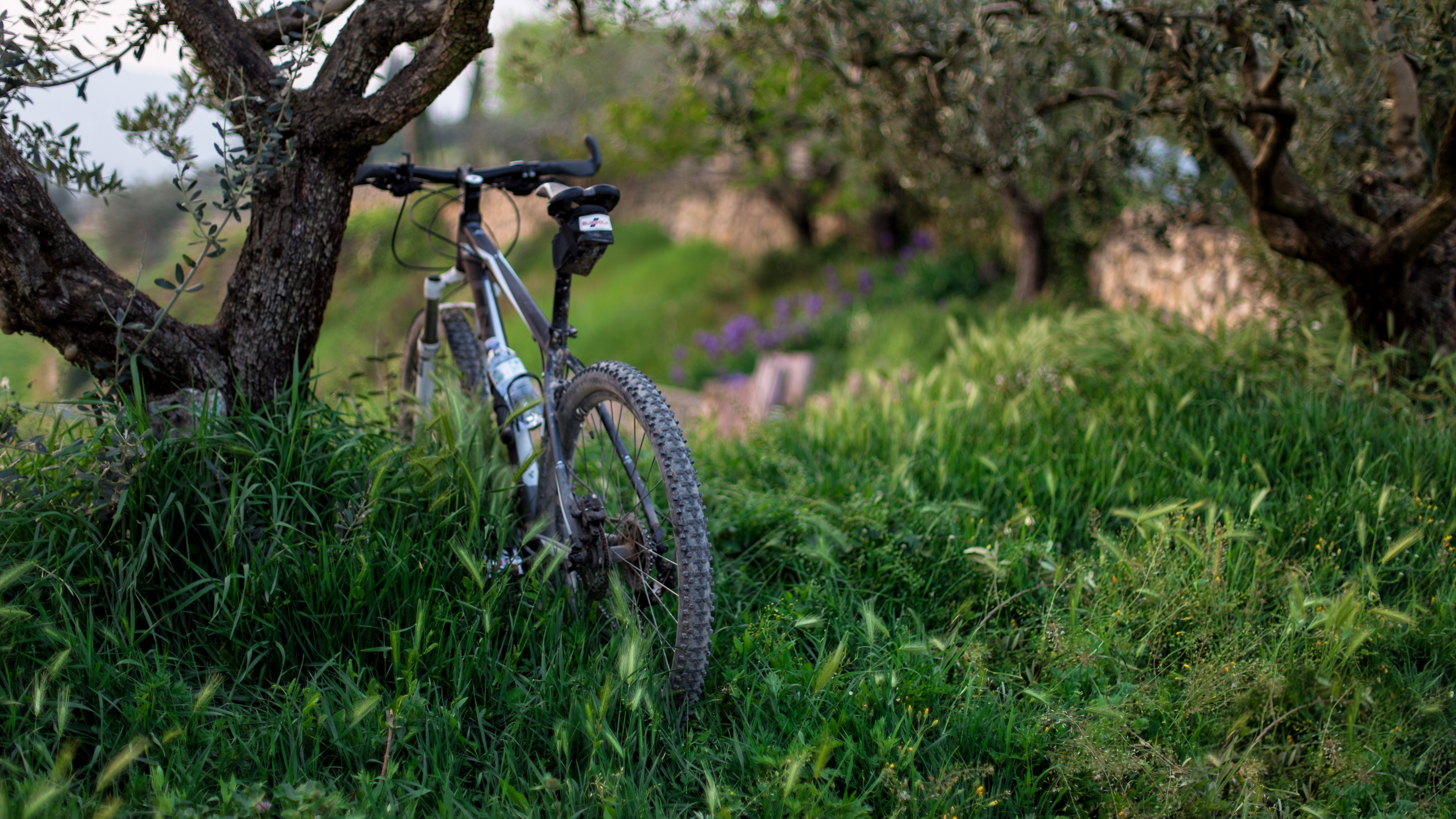 bicycle grass trees 4k 1540063286 - bicycle, grass, trees 4k - Trees, Grass, Bicycle
