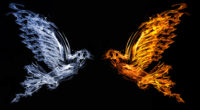 bird fire and water 4k 1540748756 200x110 - Bird Fire And Water 4k - fire wallpapers, bird wallpapers, artist wallpapers