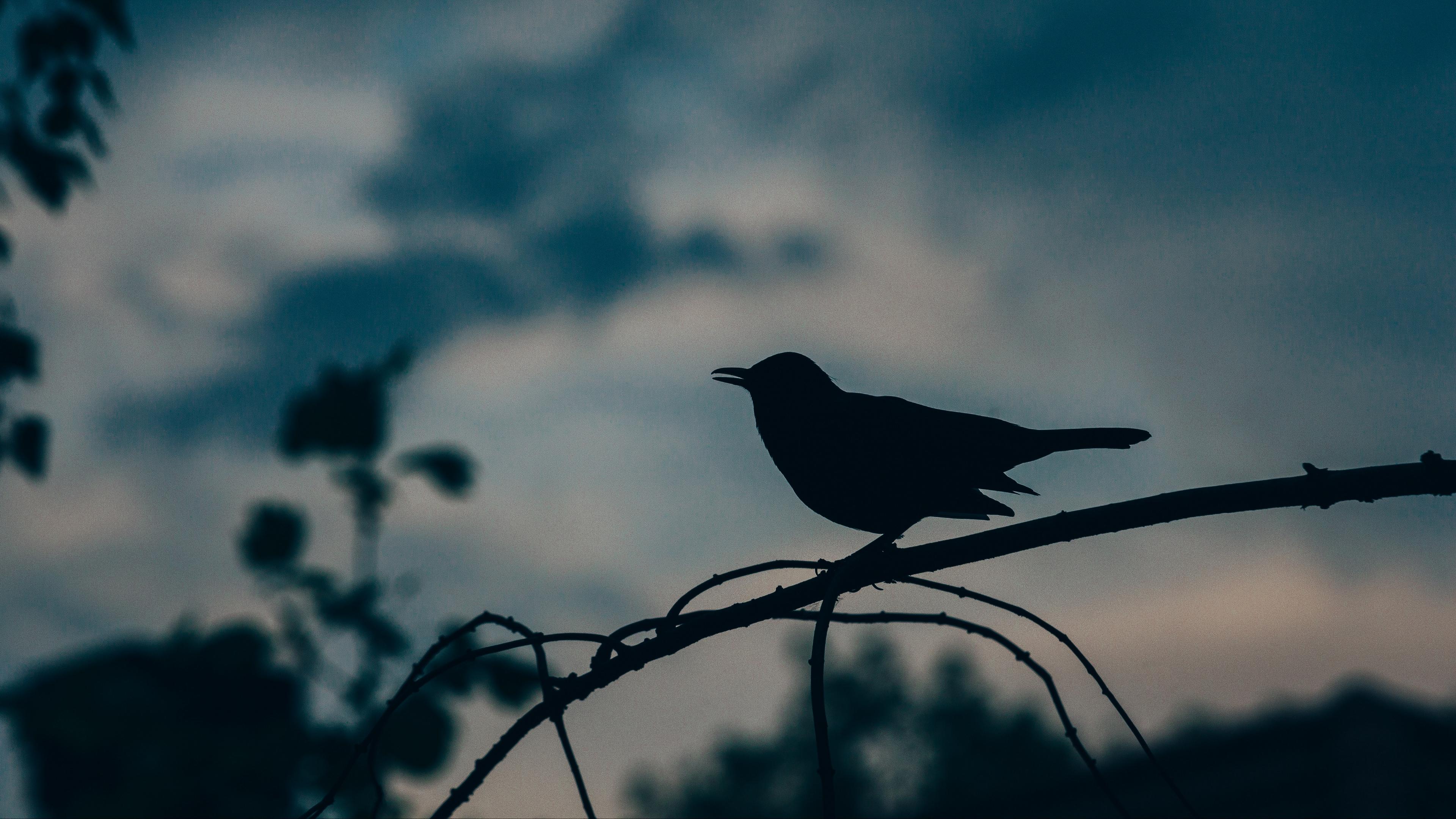 bird silhouette branch 4k 1540576320 - bird, silhouette, branch 4k - Silhouette, branch, Bird