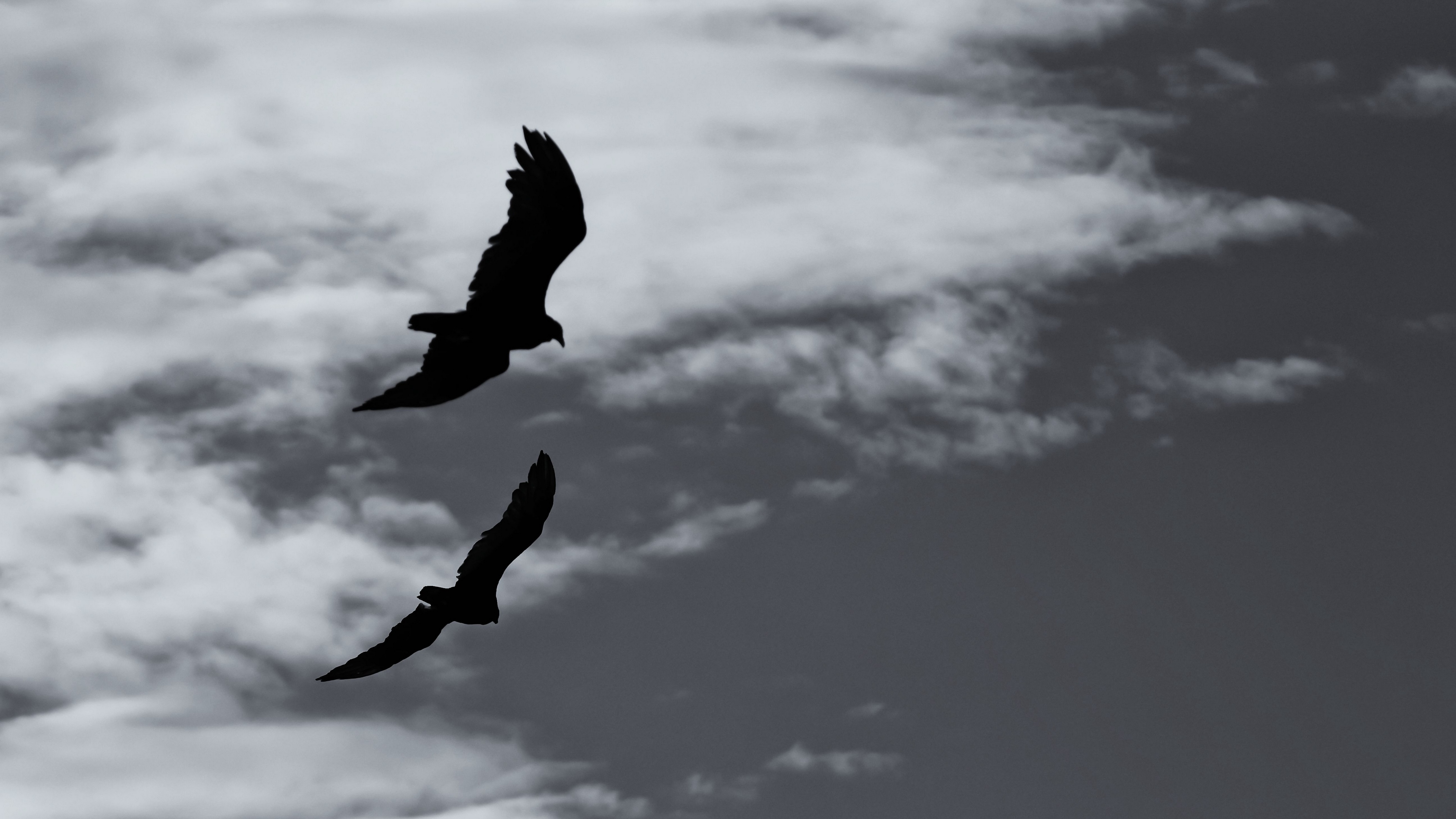 birds silhouette flight sky bw 4k 1540574462 - birds, silhouette, flight, sky, bw 4k - Silhouette, Flight, Birds