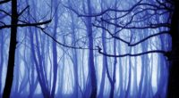 blue mist nature trees 4k 1540135744 200x110 - Blue Mist Nature Trees 4k - trees wallpapers, nature wallpapers, hd-wallpapers, forest wallpapers, 4k-wallpapers