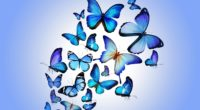 butterfly art 4k 1540748412 200x110 - Butterfly Art 4k - digital art wallpapers, butterfly wallpapers, artist wallpapers