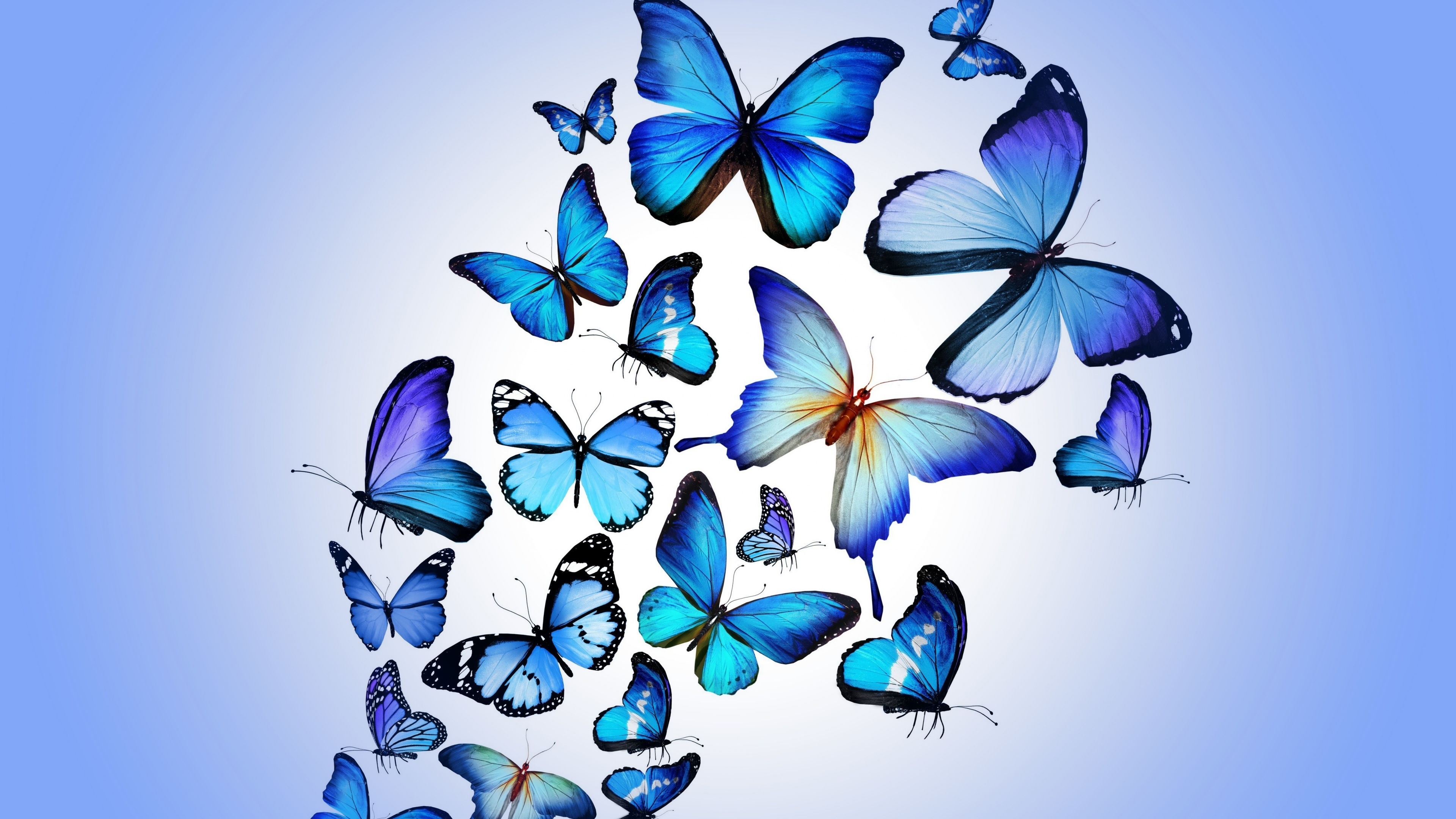 butterfly art 4k 1540748412 - Butterfly Art 4k - digital art wallpapers, butterfly wallpapers, artist wallpapers