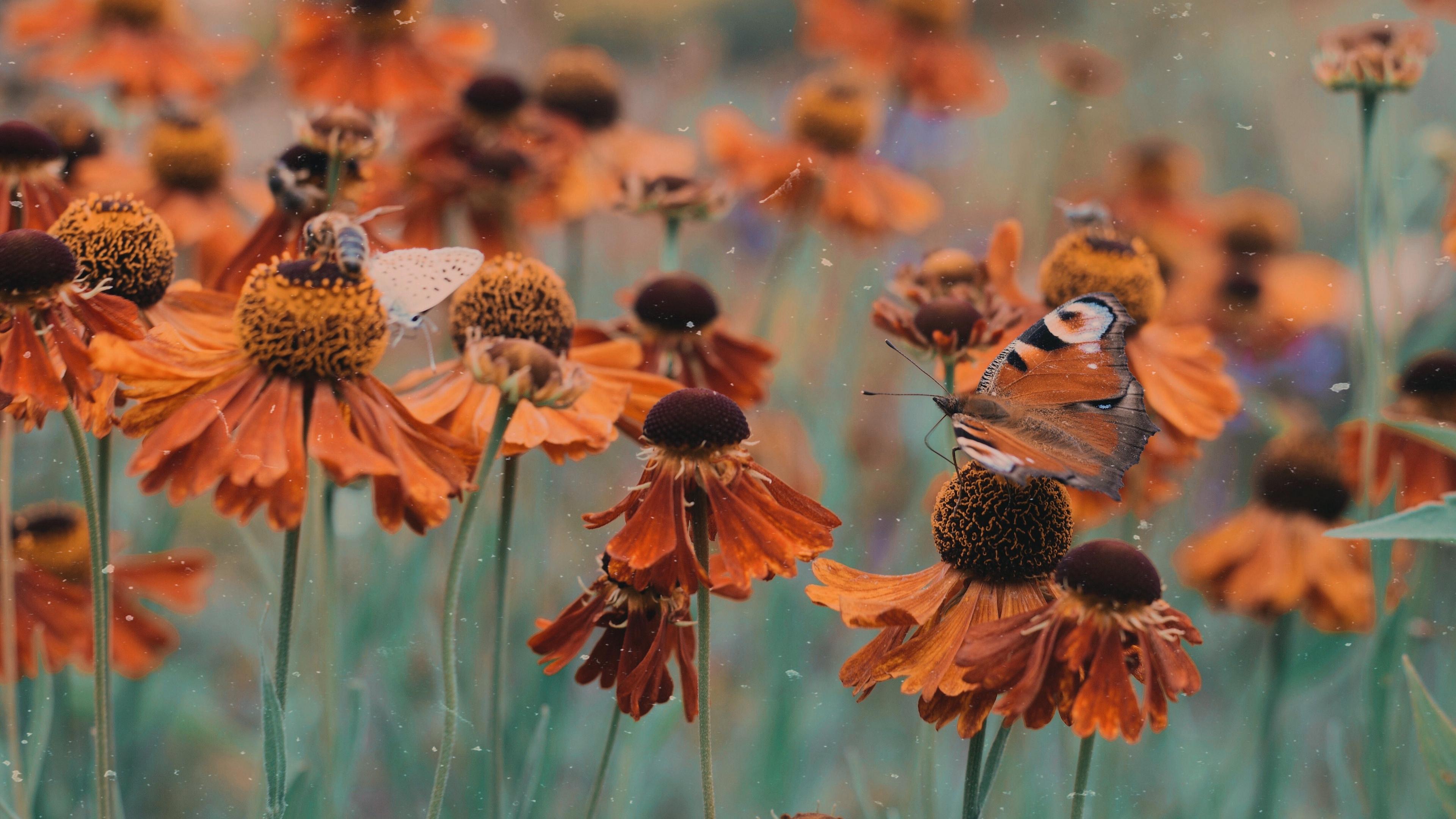 butterfly flowers flowerbed blur 4k 1540064944 - butterfly, flowers, flowerbed, blur 4k - Flowers, flowerbed, Butterfly