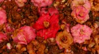 camellia dry flowers garden pink red 4k 1540064555 200x110 - camellia, dry, flowers, garden, pink, red 4k - Flowers, dry, camellia