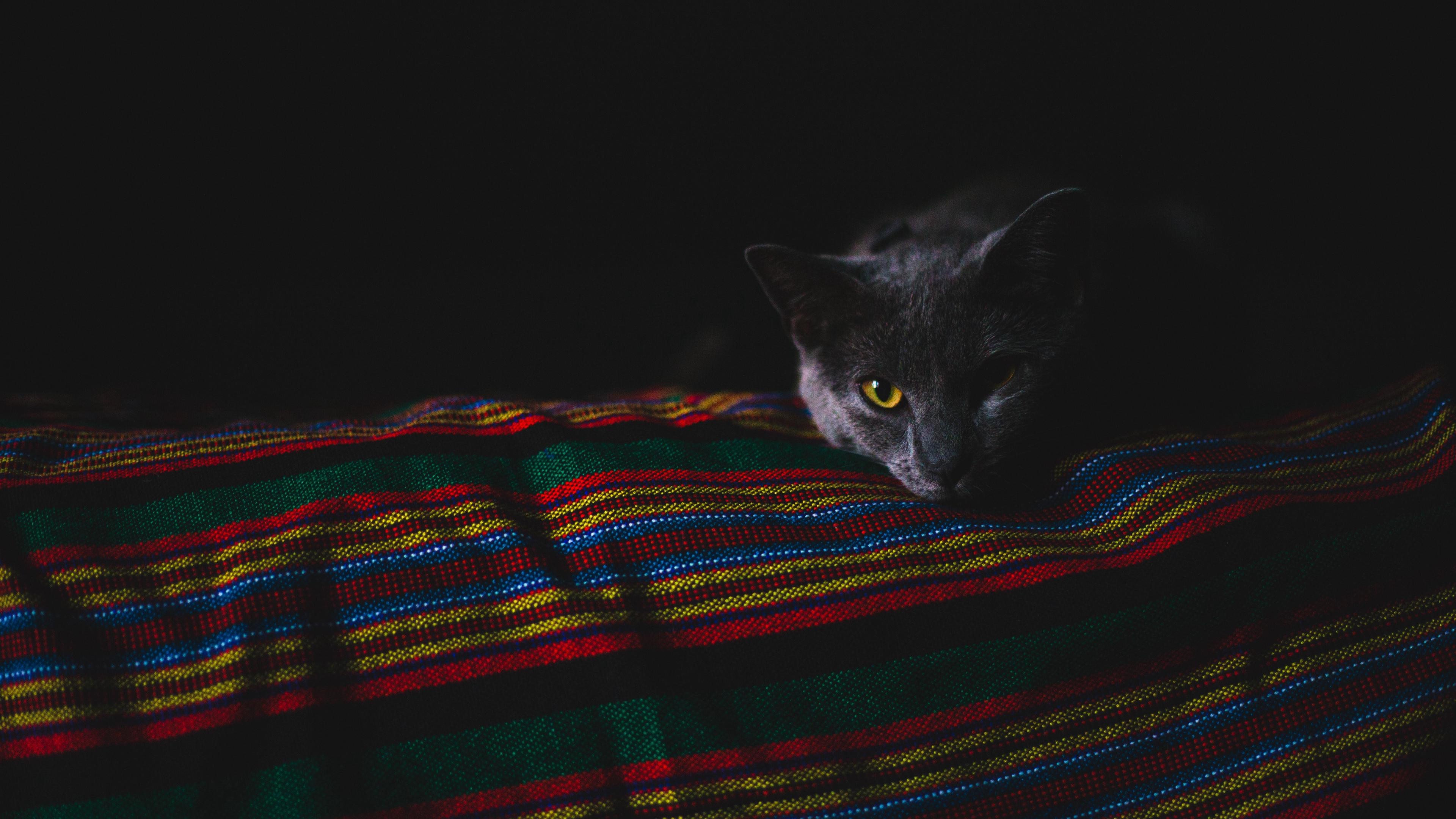 cat gray muzzle dark 4k 1540574484 - cat, gray, muzzle, dark 4k - muzzle, Gray, Cat