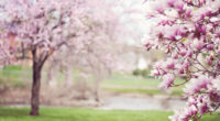 cherry blossom tree 4k 1540135855 200x110 - Cherry Blossom Tree 4k - tree wallpapers, hd-wallpapers, flowers wallpapers, blossom wallpapers, 5k wallpapers, 4k-wallpapers