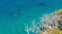 clear sea trees branches ultra quality 4k 1540133703 200x110 - Clear Sea Trees Branches Ultra Quality 4k - trees wallpapers, sea wallpapers, nature wallpapers, hd-wallpapers, 4k-wallpapers
