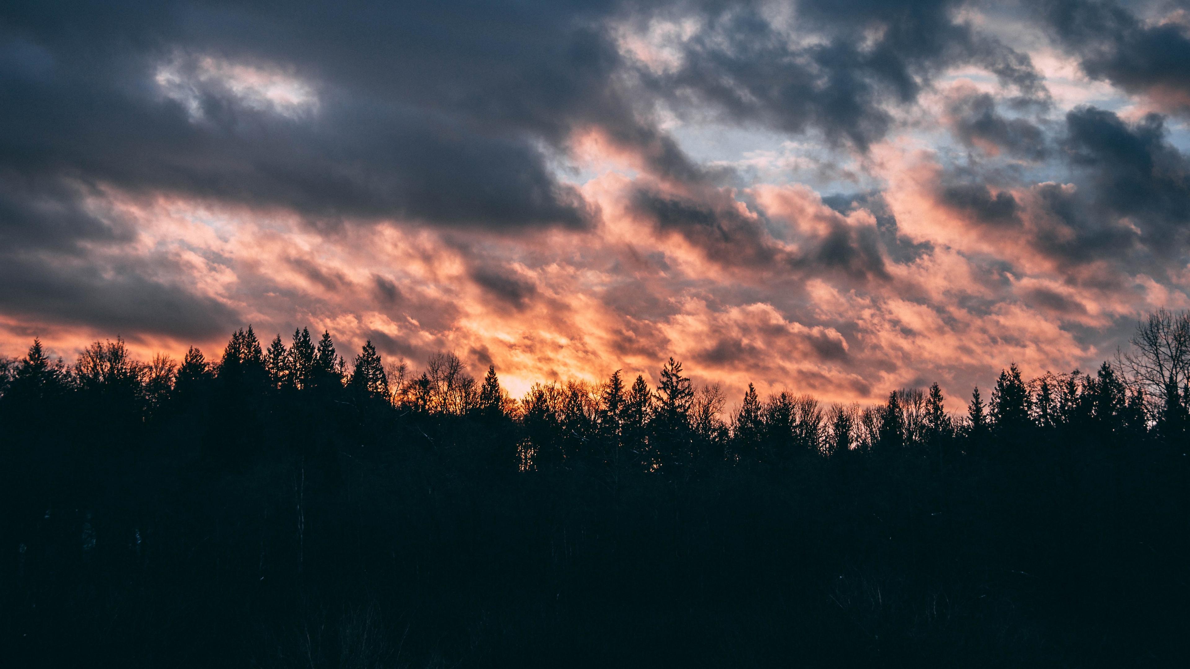 clouds trees sky sunset 4k 1540574904 - clouds, trees, sky, sunset 4k - Trees, Sky, Clouds