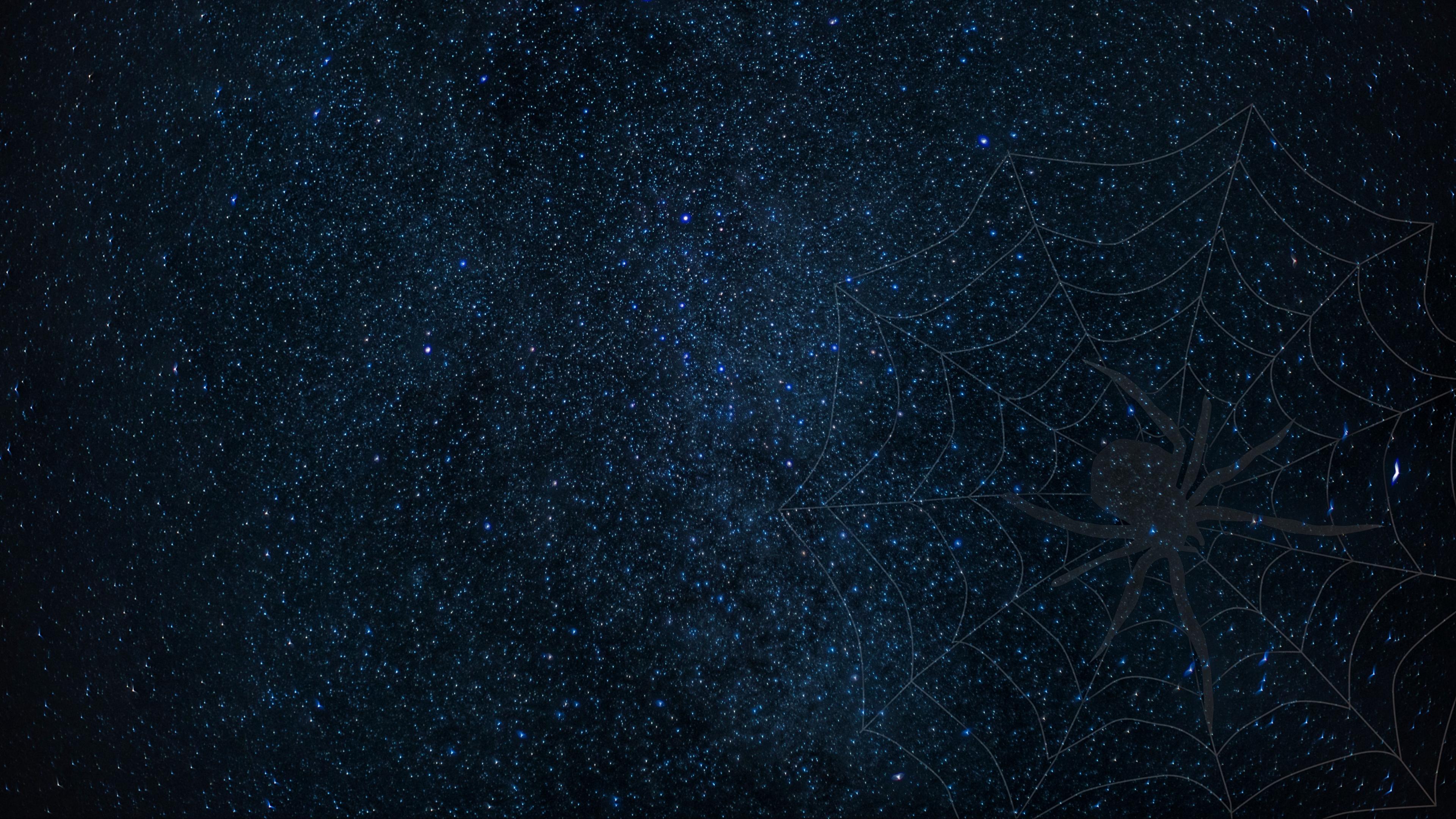 cobweb spider starry sky shine 4k 1540575140 - cobweb, spider, starry sky, shine 4k - starry sky, Spider, cobweb