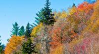 colorful trees 4k 1540131535 200x110 - Colorful Trees 4k - trees wallpapers, nature wallpapers, colorful wallpapers