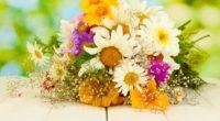 daisies asters gypsophila flower beauty 4k 1540064312 200x110 - daisies, asters, gypsophila, flower, beauty 4k - gypsophila, Daisies, asters