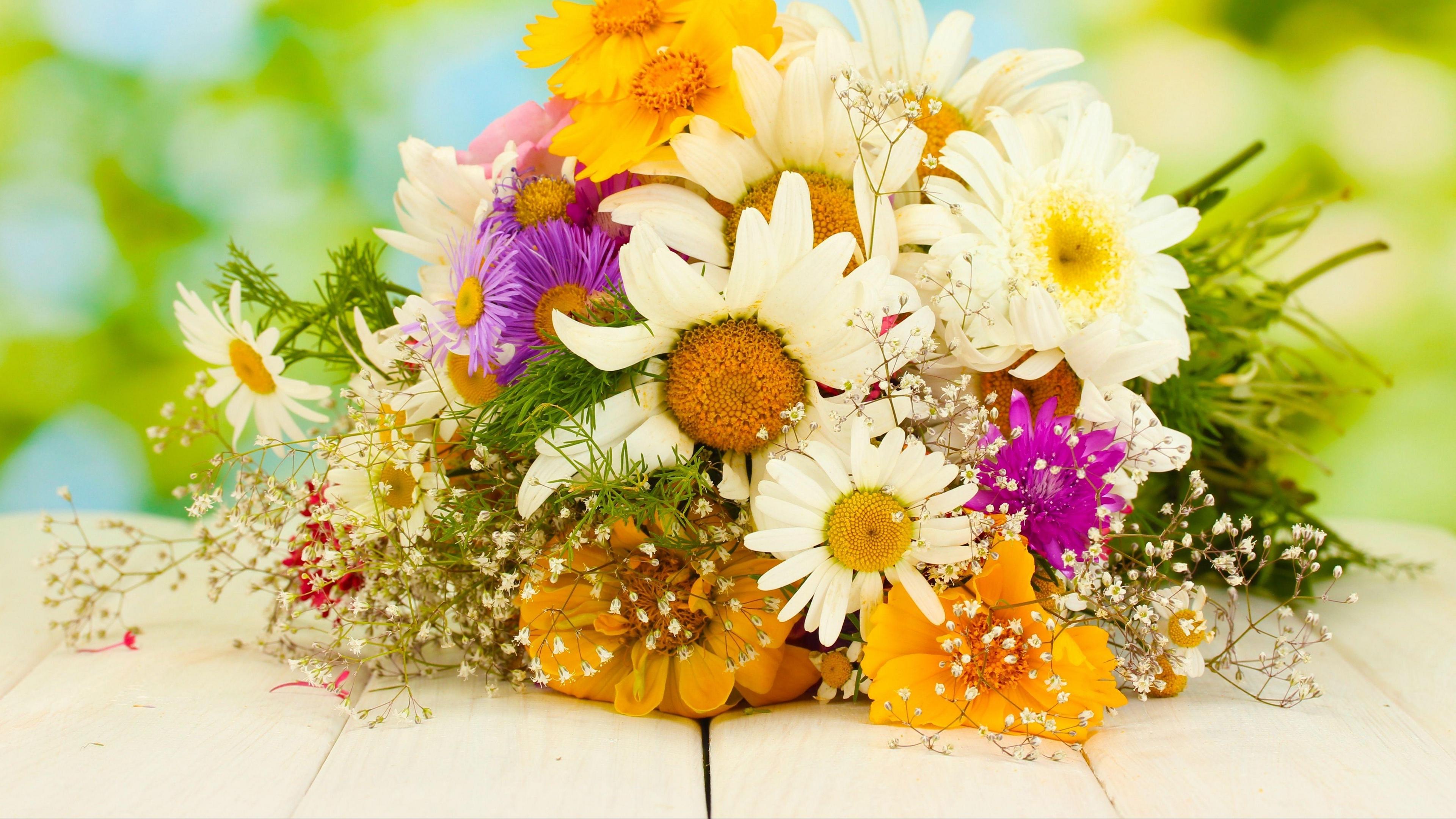 daisies asters gypsophila flower beauty 4k 1540064312 - daisies, asters, gypsophila, flower, beauty 4k - gypsophila, Daisies, asters