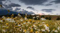 daisies field cloudy summer 4k 1540064942 200x110 - daisies, field, cloudy, summer 4k - Field, Daisies, Cloudy