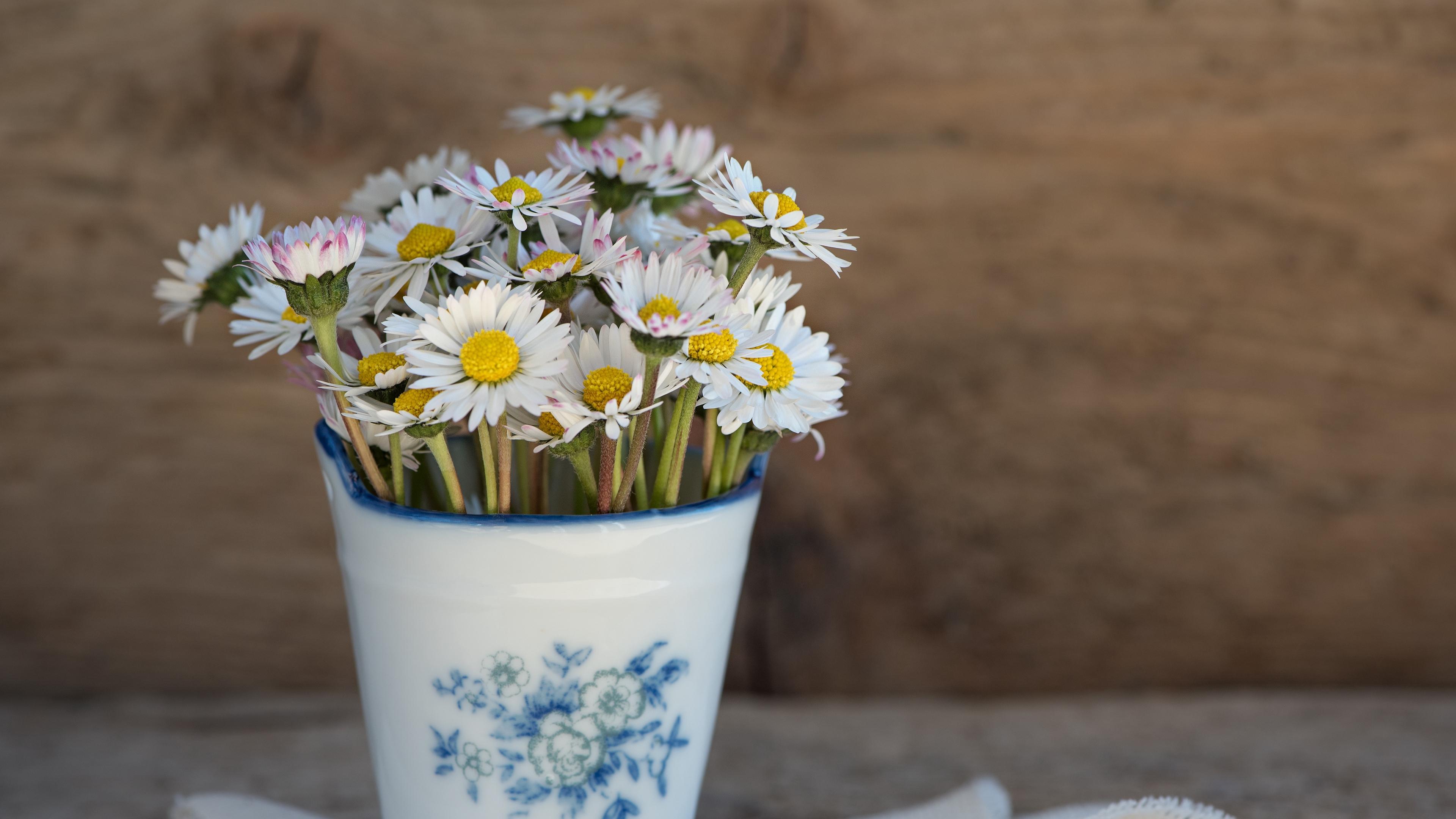 daisies vase napkin 4k 1540064729 - daisies, vase, napkin 4k - Vase, napkin, Daisies