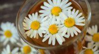 daisy drink petals 4k 1540064736 200x110 - daisy, drink, petals 4k - Petals, Drink, Daisy