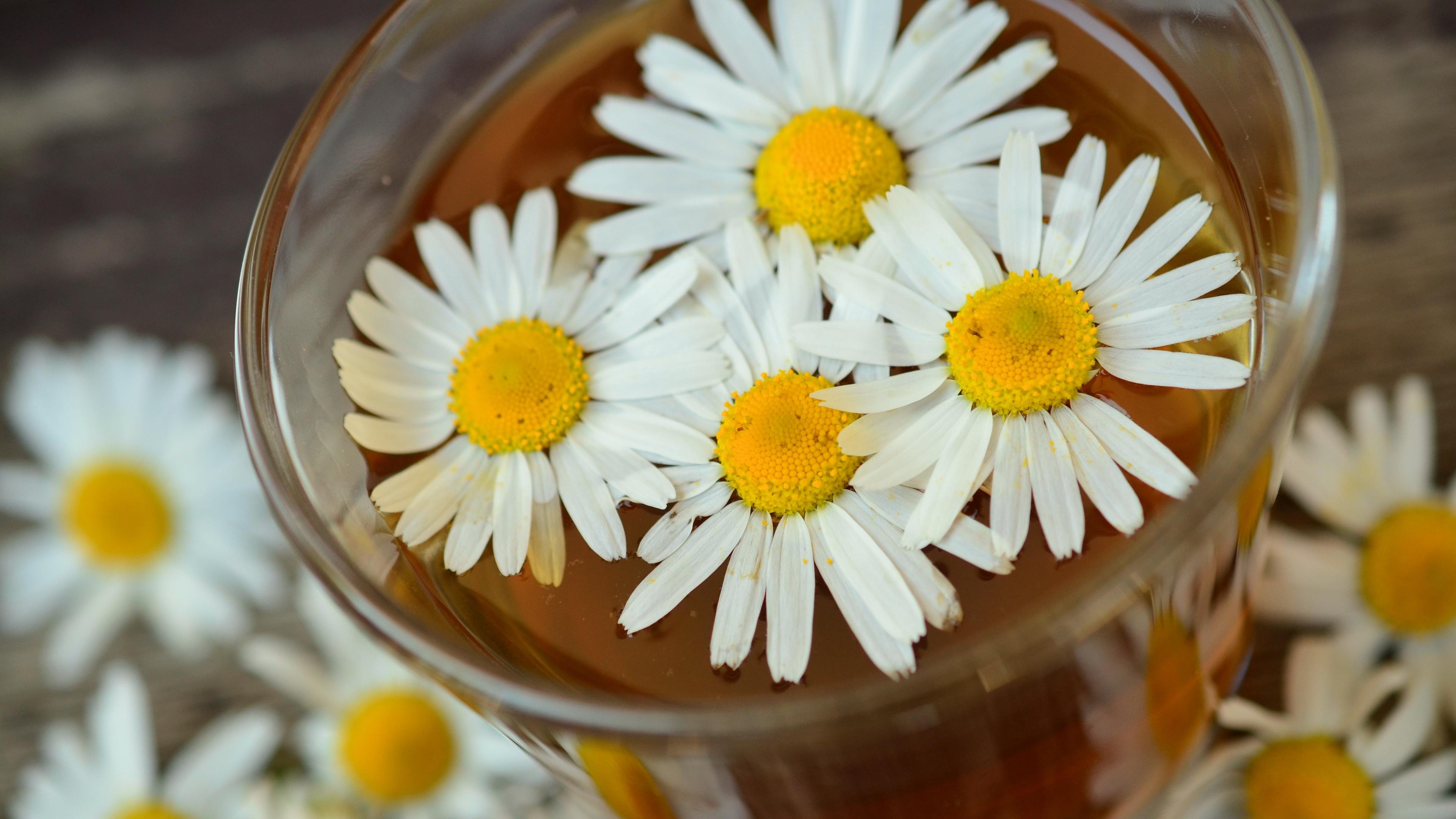 daisy drink petals 4k 1540064736 - daisy, drink, petals 4k - Petals, Drink, Daisy