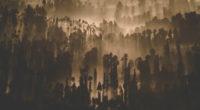 dark forest trees nature scenery 4k 1540135657 200x110 - Dark Forest Trees Nature Scenery 4k - trees wallpapers, nature wallpapers, hd-wallpapers, forest wallpapers, dark wallpapers, 5k wallpapers, 4k-wallpapers