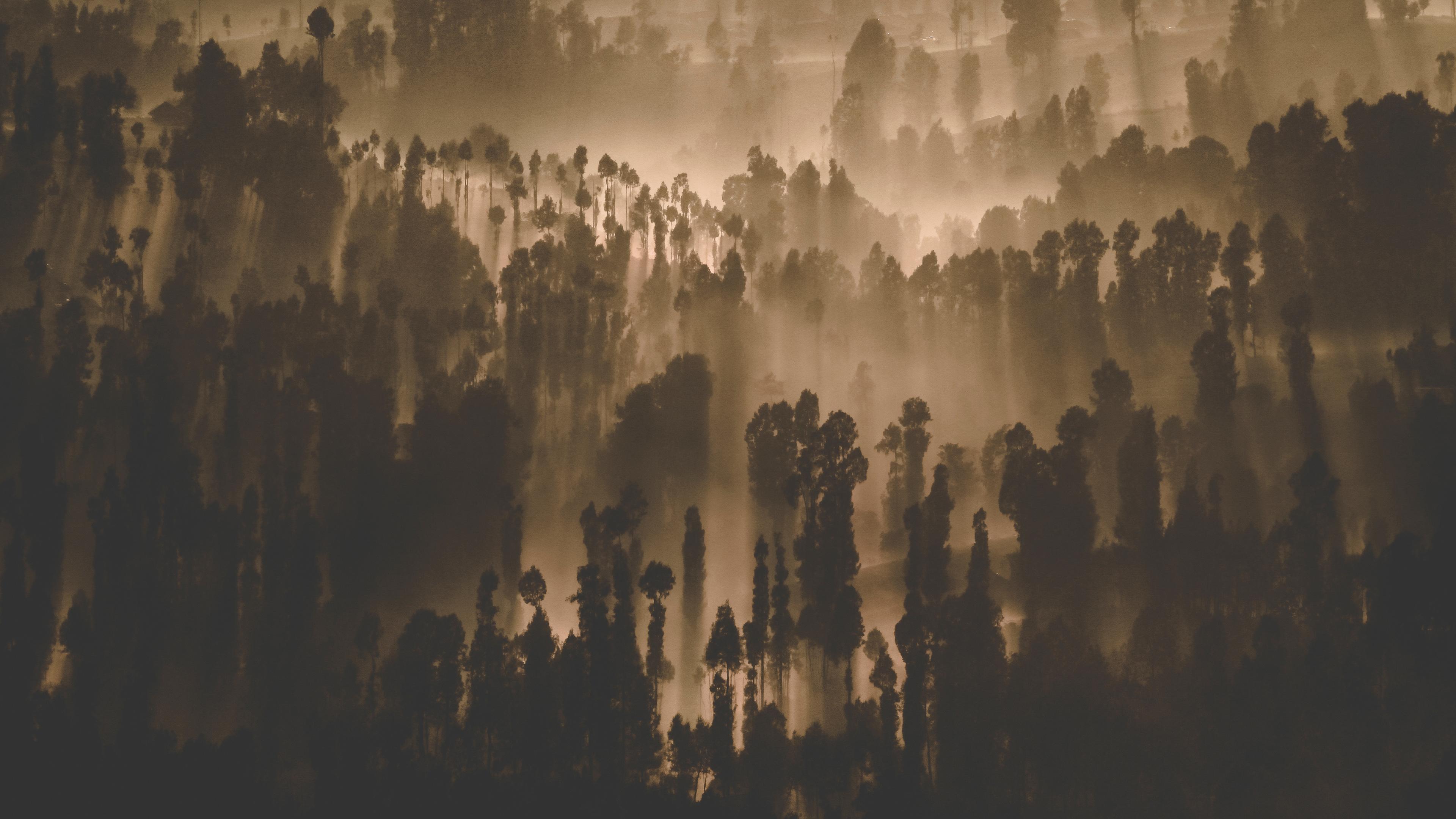 dark forest trees nature scenery 4k 1540135657 - Dark Forest Trees Nature Scenery 4k - trees wallpapers, nature wallpapers, hd-wallpapers, forest wallpapers, dark wallpapers, 5k wallpapers, 4k-wallpapers