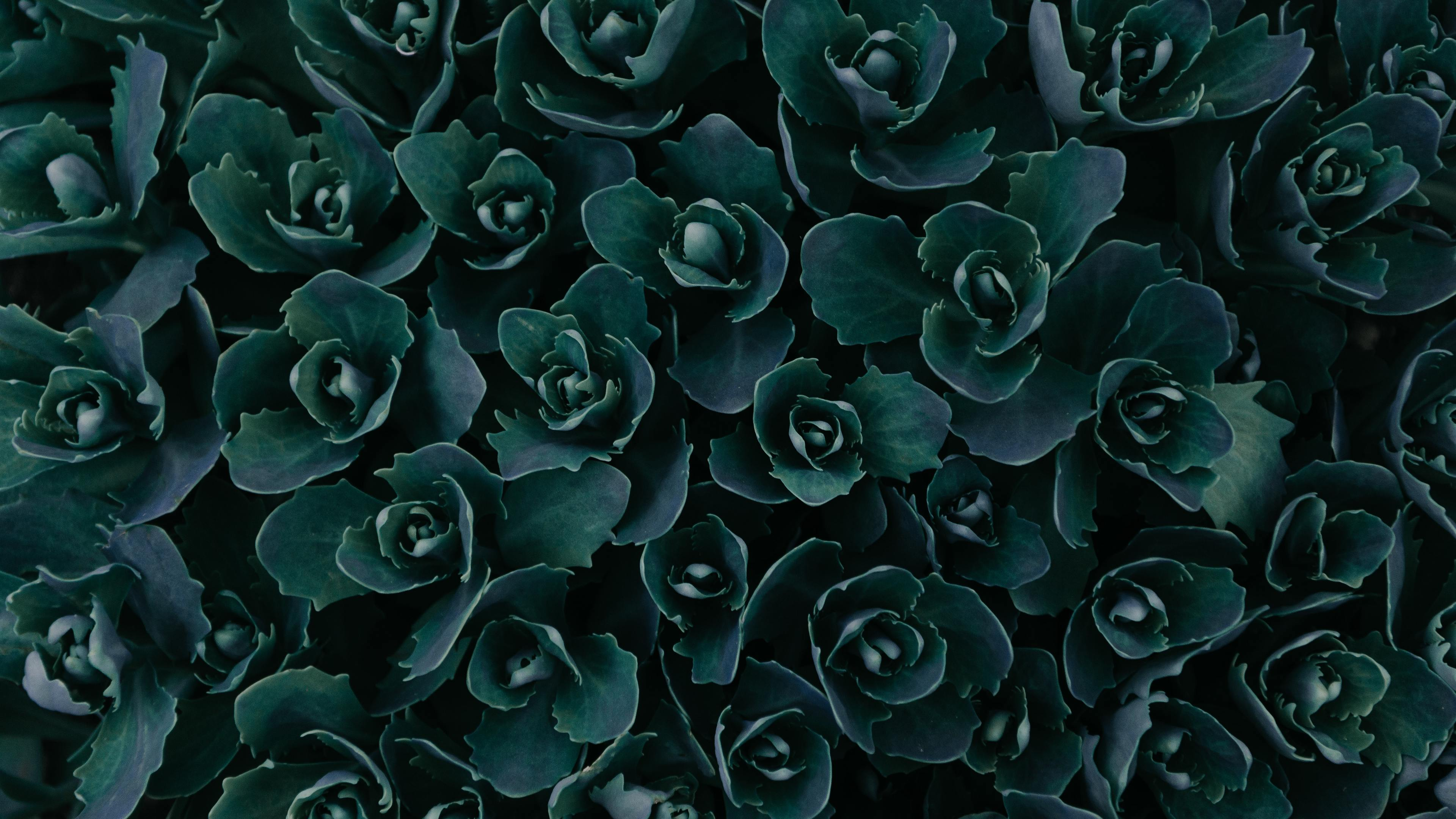 dark green plants abstract 5k 1540141555 - Dark Green Plants Abstract 5k - plants wallpapers, photography wallpapers, nature wallpapers, hd-wallpapers, green wallpapers, abstract wallpapers, 5k wallpapers, 4k-wallpapers