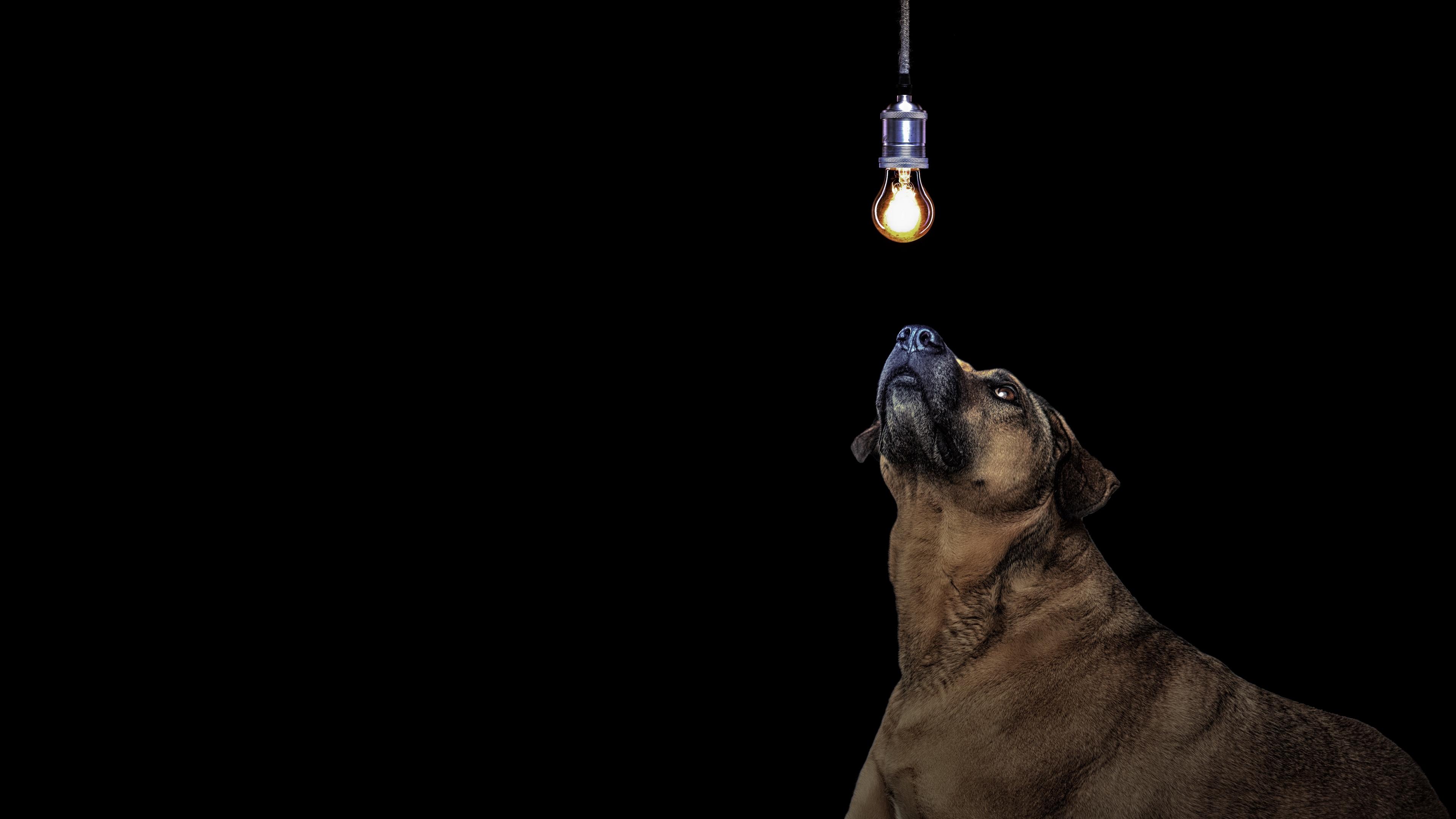 dog light bulb idea 4k 1540574348 - dog, light bulb, idea 4k - light bulb, idea, Dog