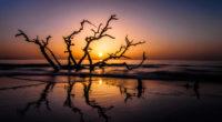 driftwood beach 4k 1540131999 200x110 - Driftwood Beach 4k - sunset wallpapers, photography wallpapers, nature wallpapers, branch wallpapers, beach wallpapers