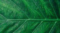 droplets on green leaf macro 4k 1540140125 200x110 - Droplets On Green Leaf Macro 4k - water wallpapers, macro wallpapersdrops wallpapers, macro wallpapers, leaf wallpapers, hd-wallpapers, 5k wallpapers, 4k-wallpapers