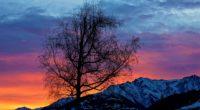 evening sunrise morning beautiful nature 4k 1540135261 200x110 - Evening Sunrise Morning Beautiful Nature 4k - tree wallpapers, sunrise wallpapers, photography wallpapers, nature wallpapers, morning wallpapers, hd-wallpapers, 5k wallpapers, 4k-wallpapers