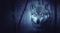 fantasy wolf 4k 1540749148 200x110 - Fantasy Wolf 4k - wolf wallpapers, hd-wallpapers, fantasy wallpapers, digital art wallpapers, artist wallpapers, 5k wallpapers